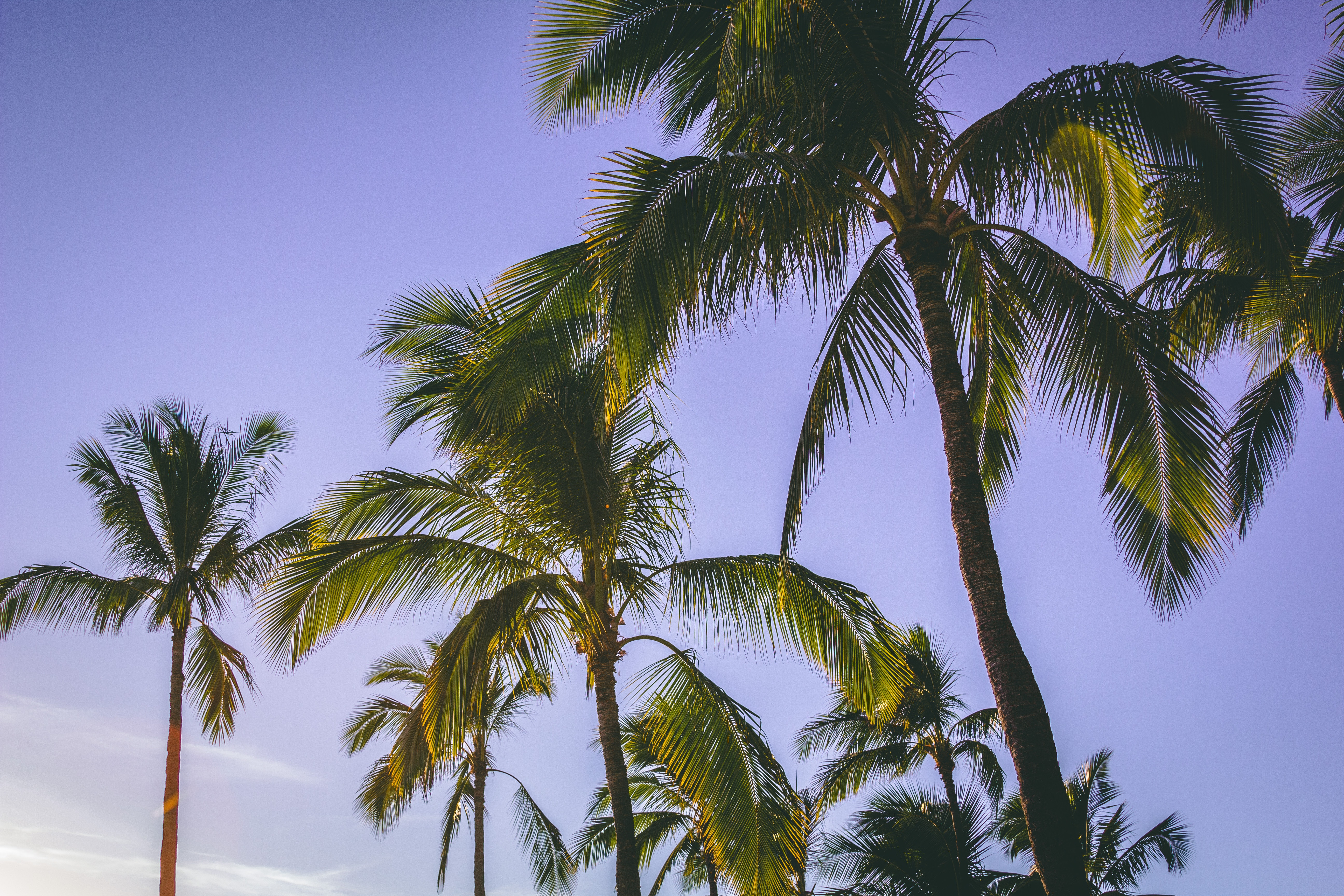 Low Angle Photography Of Coconut Trees, Blue skies, Palms, Vacation, Tropical, HQ Photo