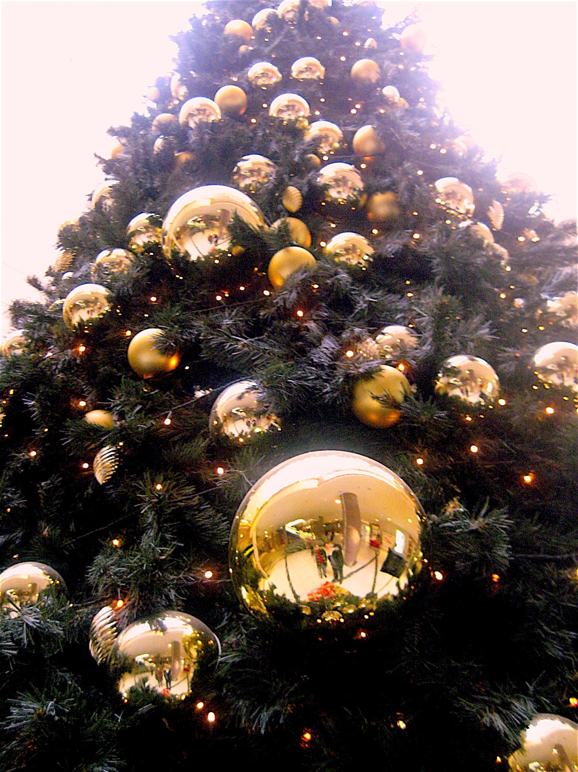 Low Angle Shot of Christmas Tree With Gold-colored Bauble, Golden, Tree, Traditional, Tradition, HQ Photo