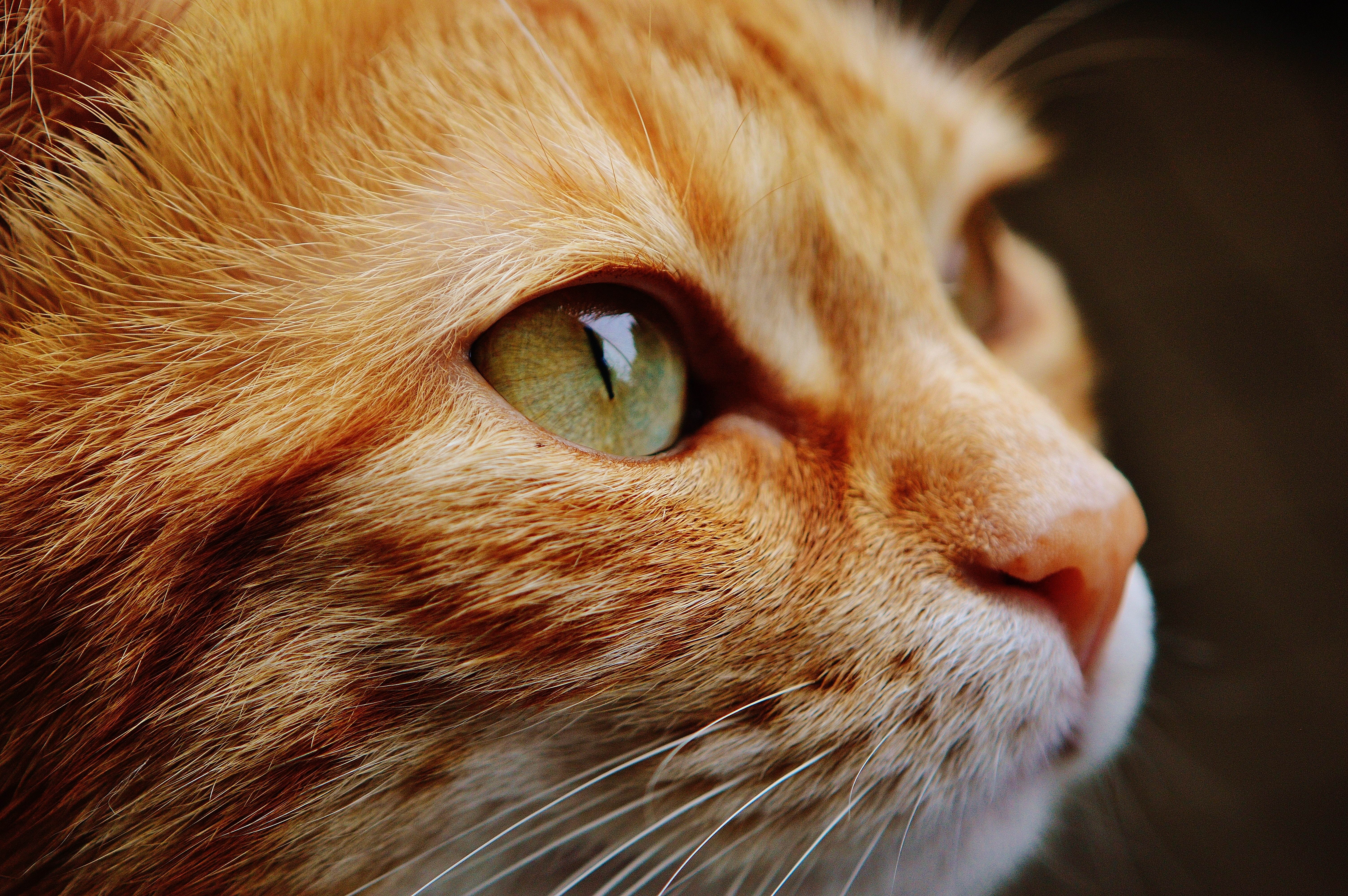 Low Angle View of Cat on Tree · Free Stock Photo