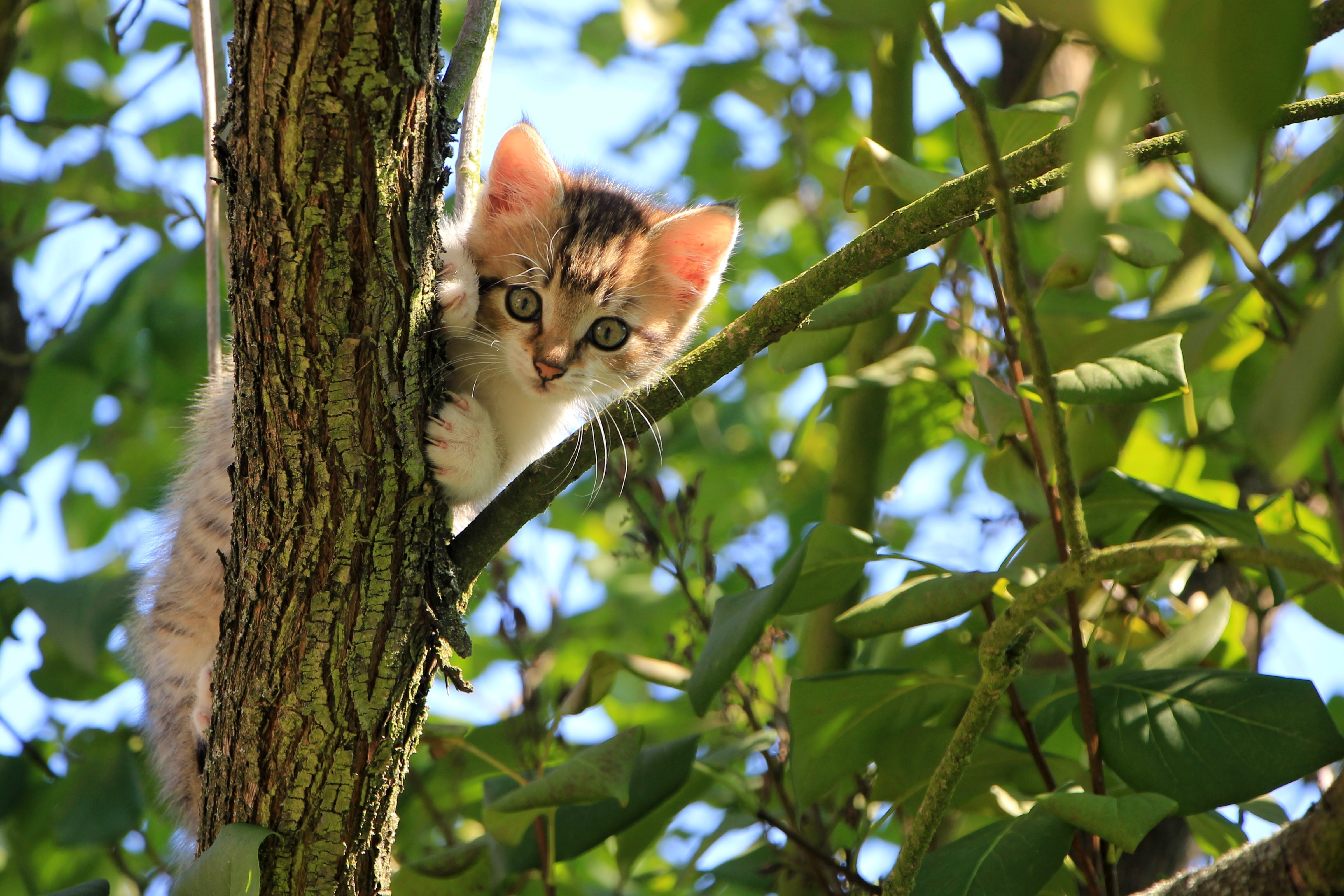 Low angle view of cat on tree photo