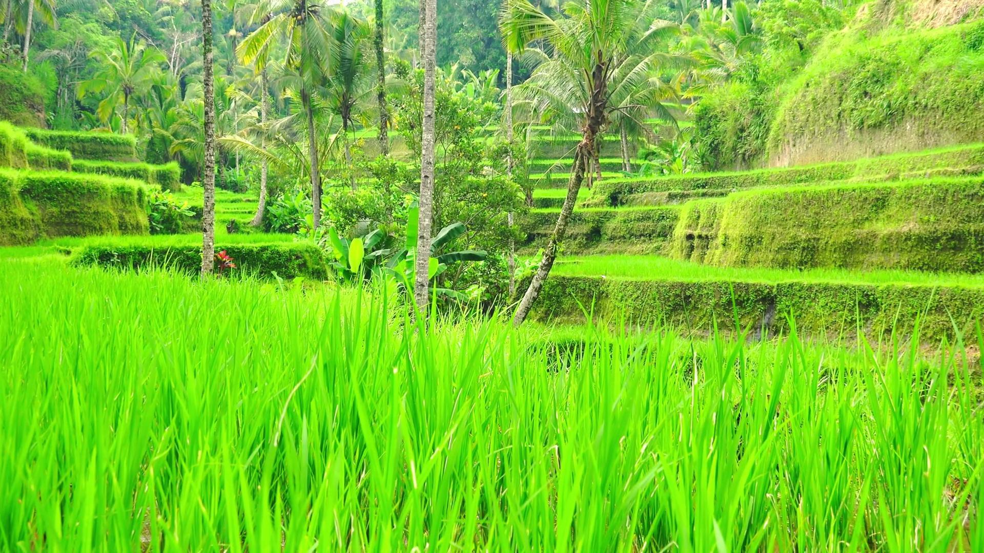 Lush green photo