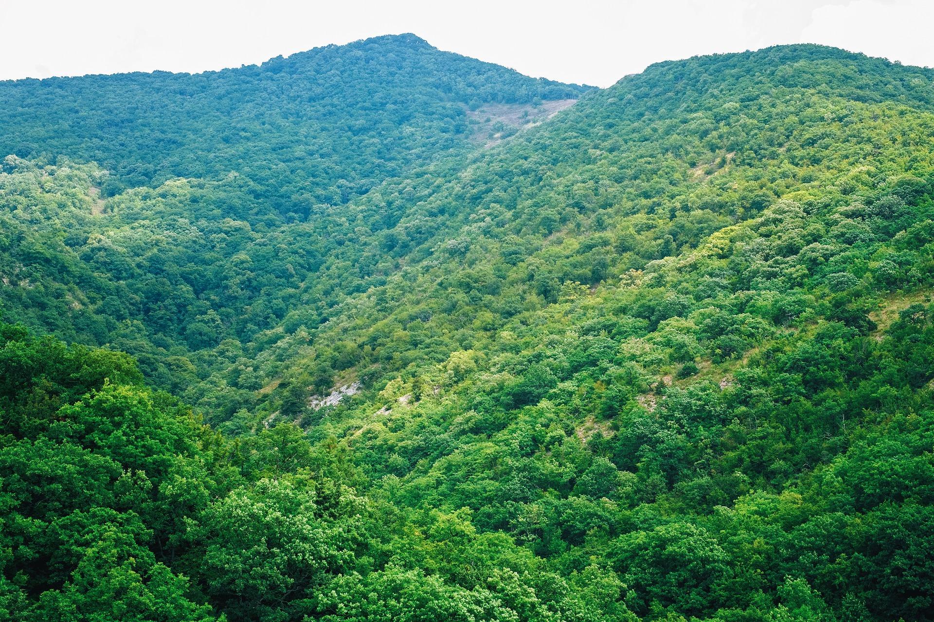 Lush Green Mountains, Green, Landscape, Mountain, Mountainous, HQ Photo