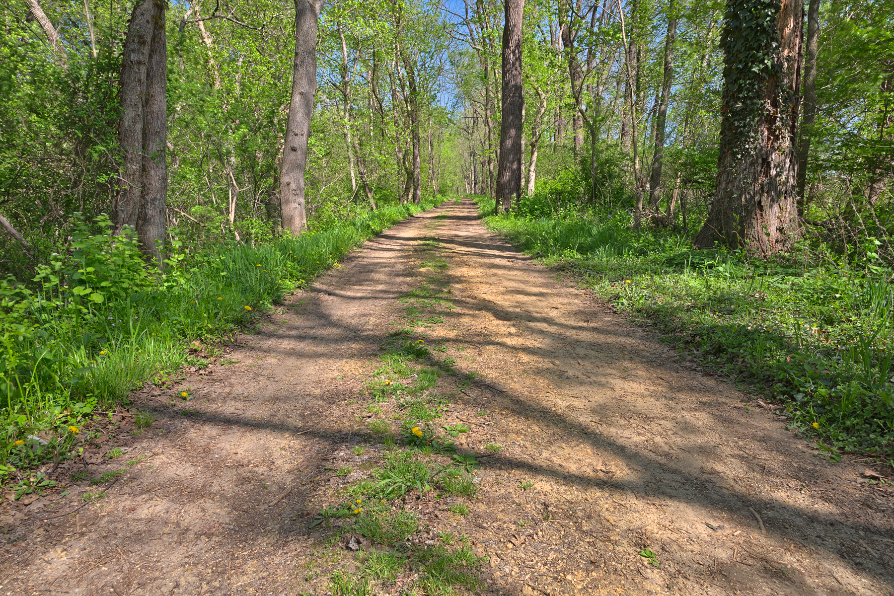 Lush spring trail - hdr photo