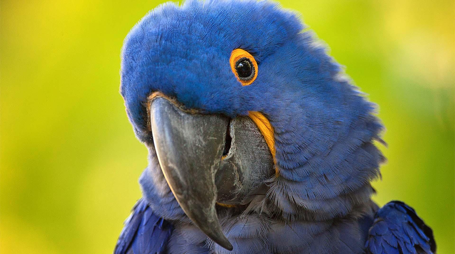 Macaw   San Diego Zoo Animals & Plants