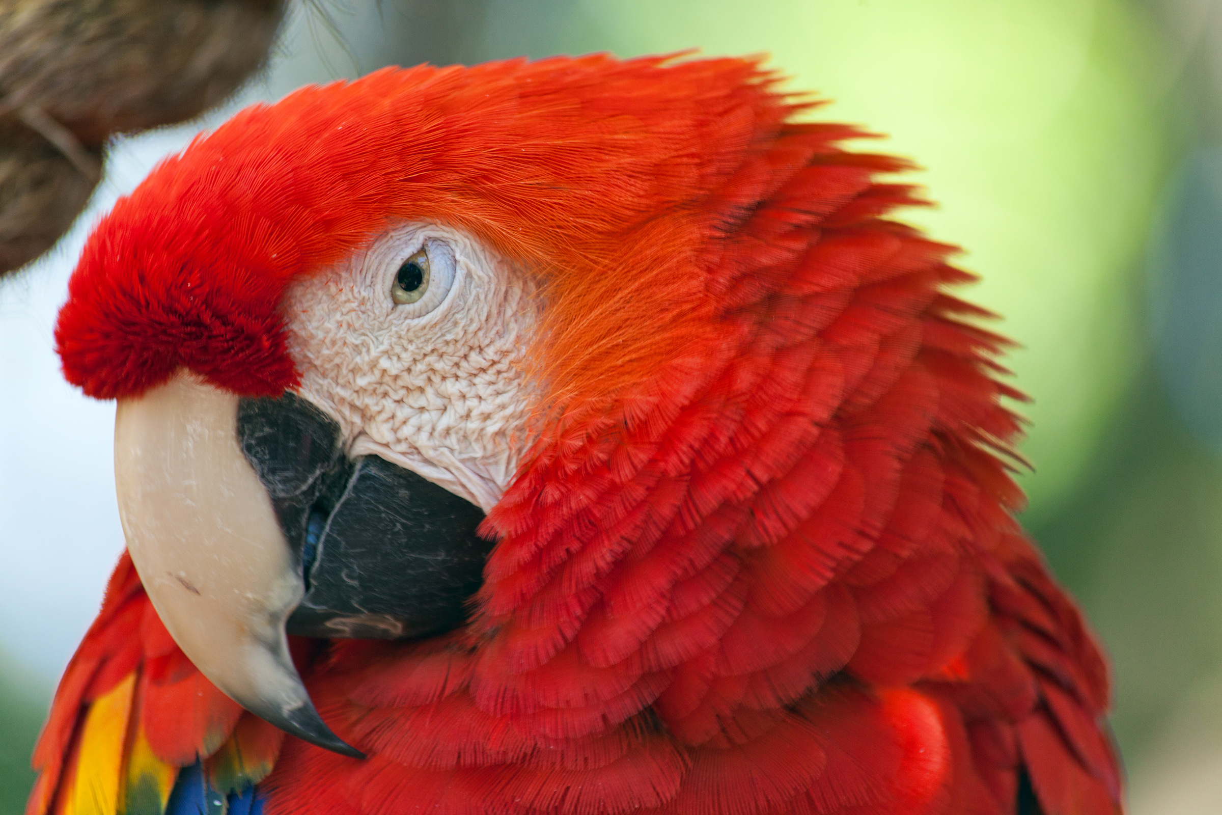 Macaw, Stock photography