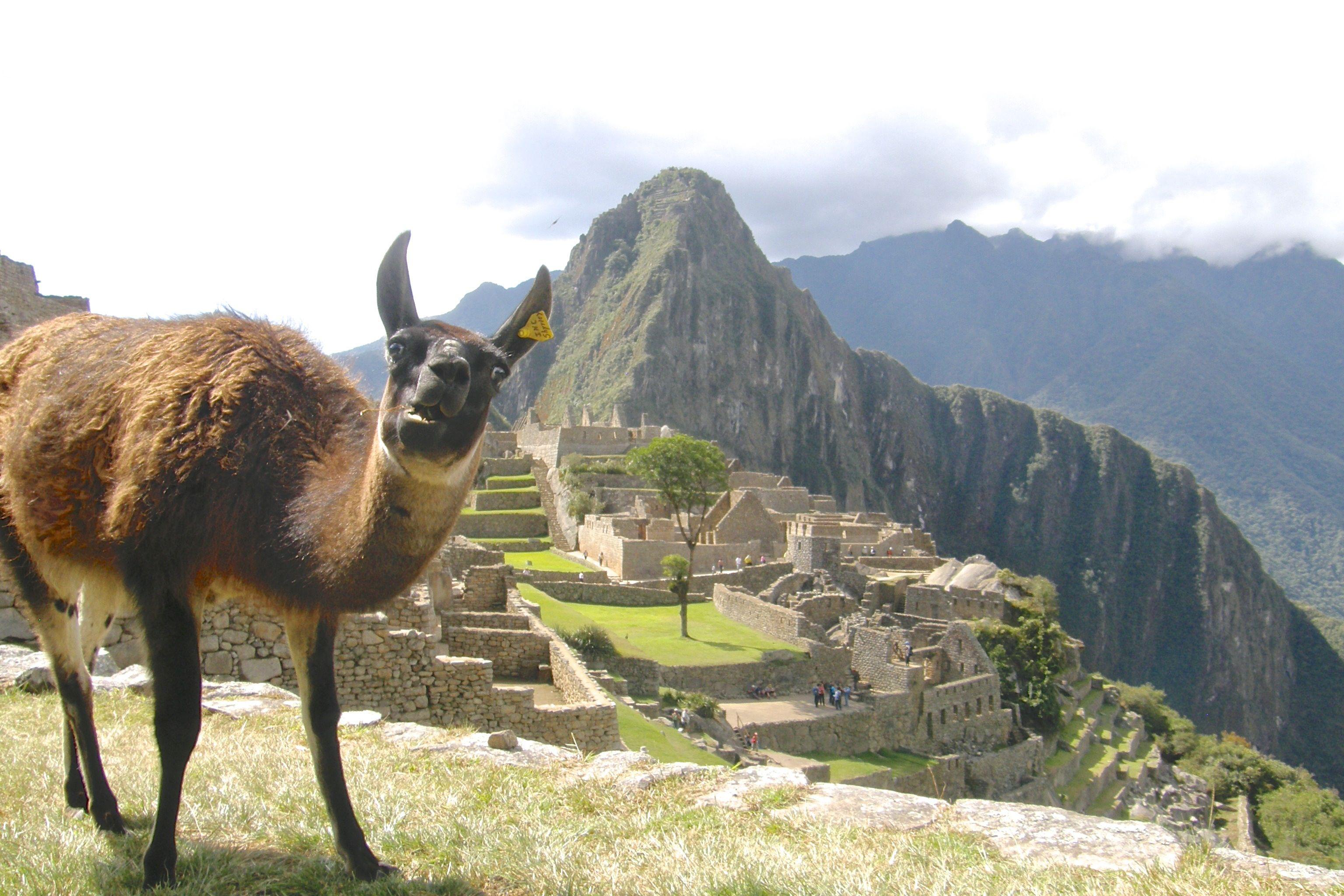 Amazing Llama Photobomb At Machu Picchu (PICTURE)