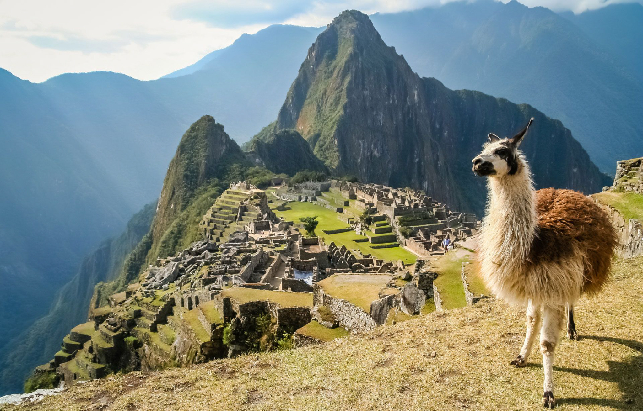 llama-at-the-machu-picchu - Those Travel Guys