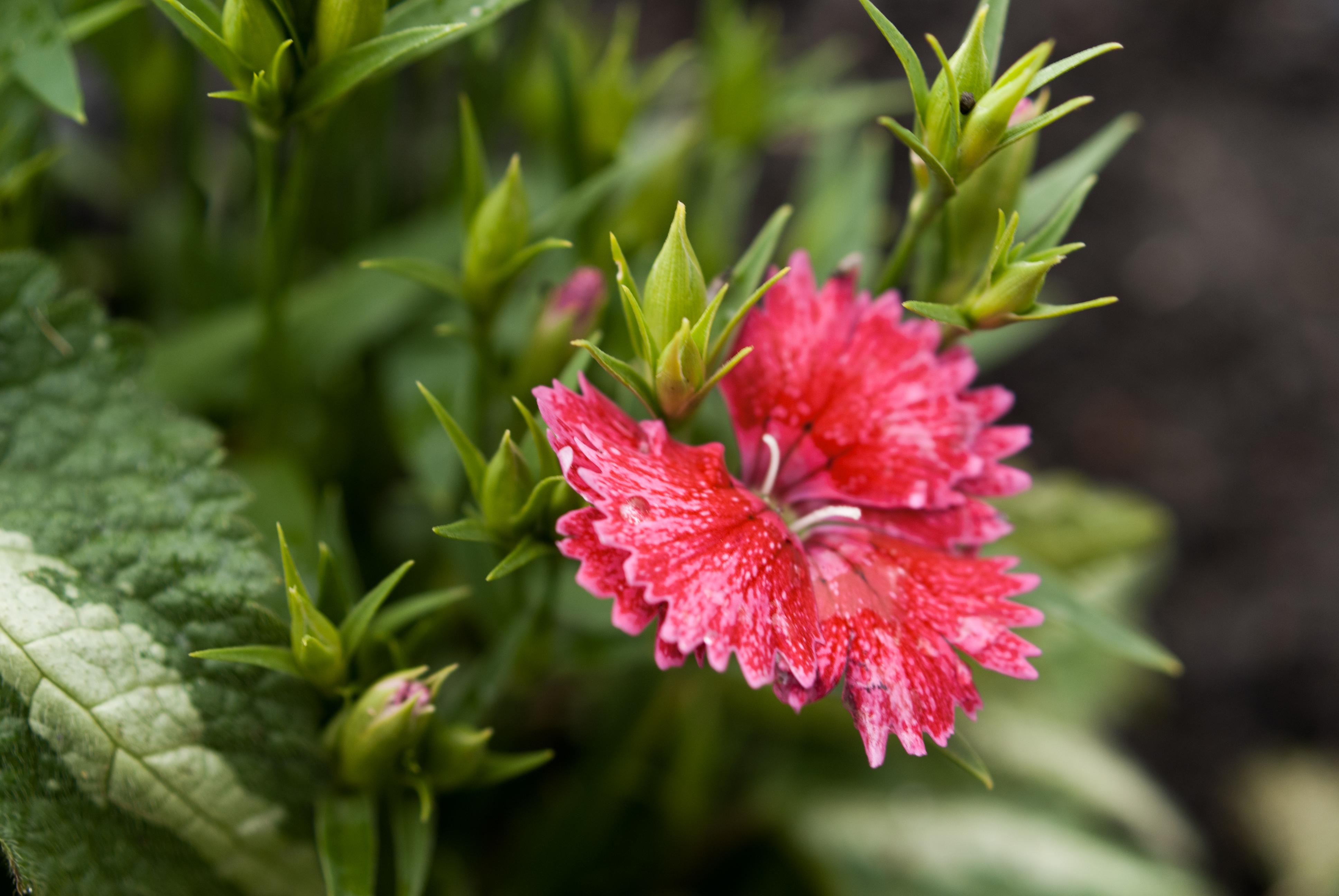 Macro flower and leaf photo