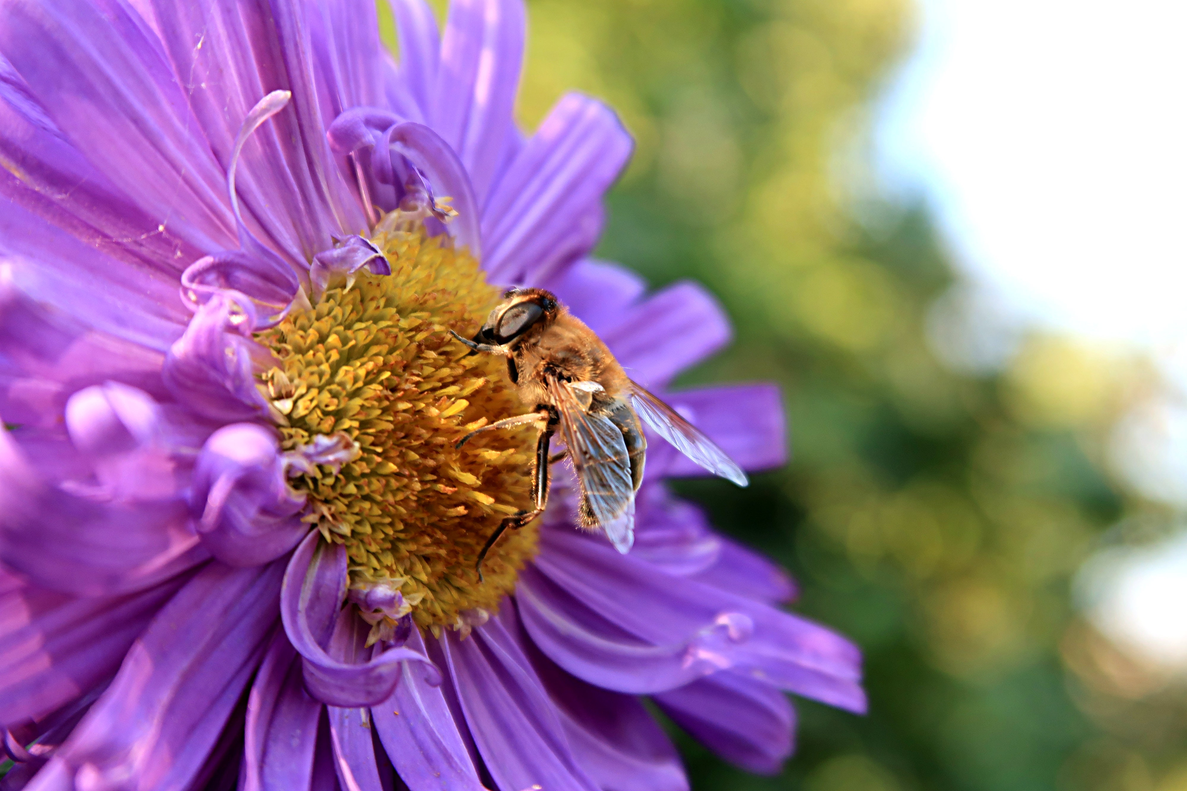Macro Photography of Bee on a Flower, Animal, Insect, Wild animal, Vibrant, HQ Photo