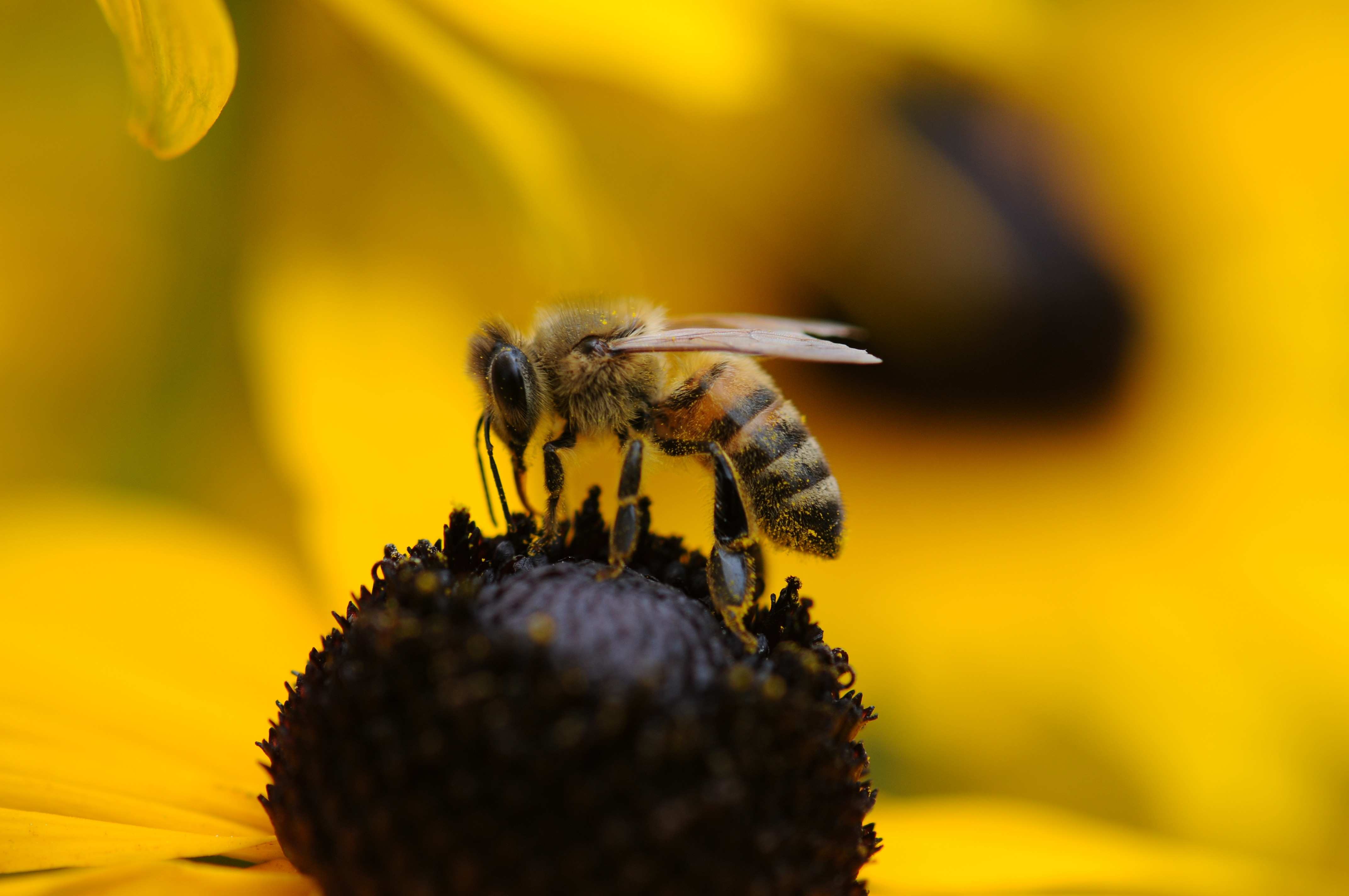 Free Images : nature, plant, flower, fly, pollen, pollination ...