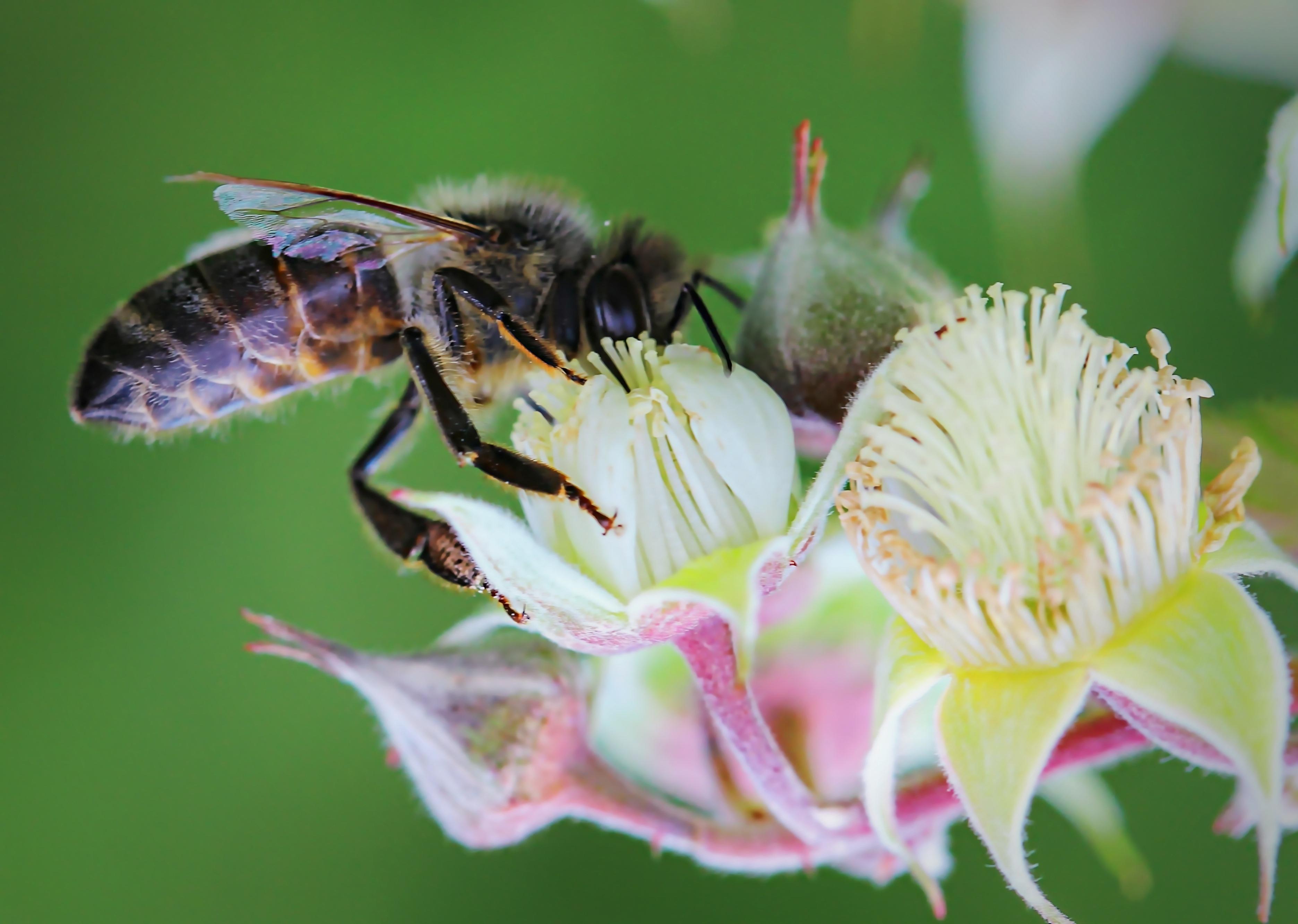 Free Images : work, nature, blossom, plant, flower, petal, summer ...