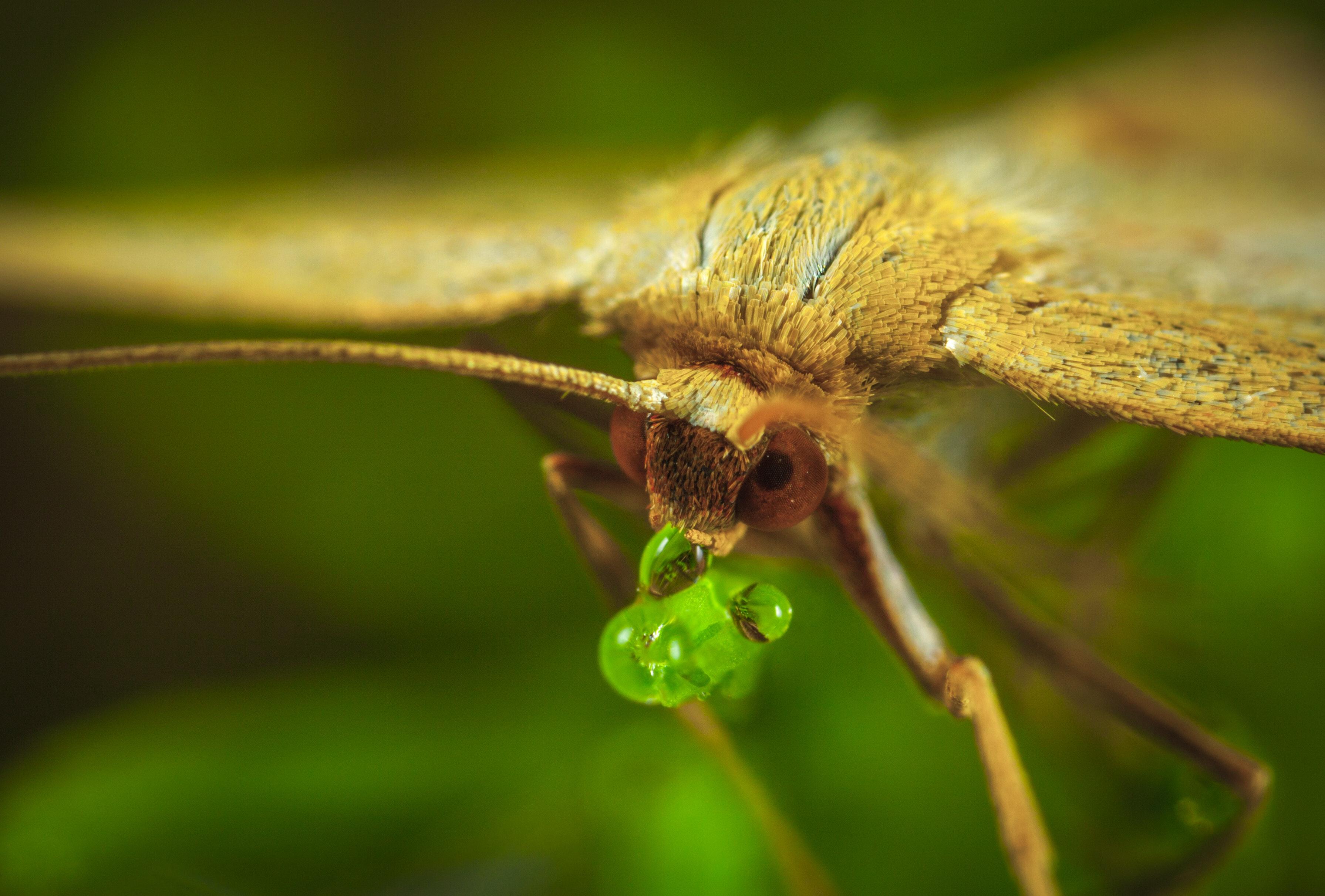 Macro photography of brown moth