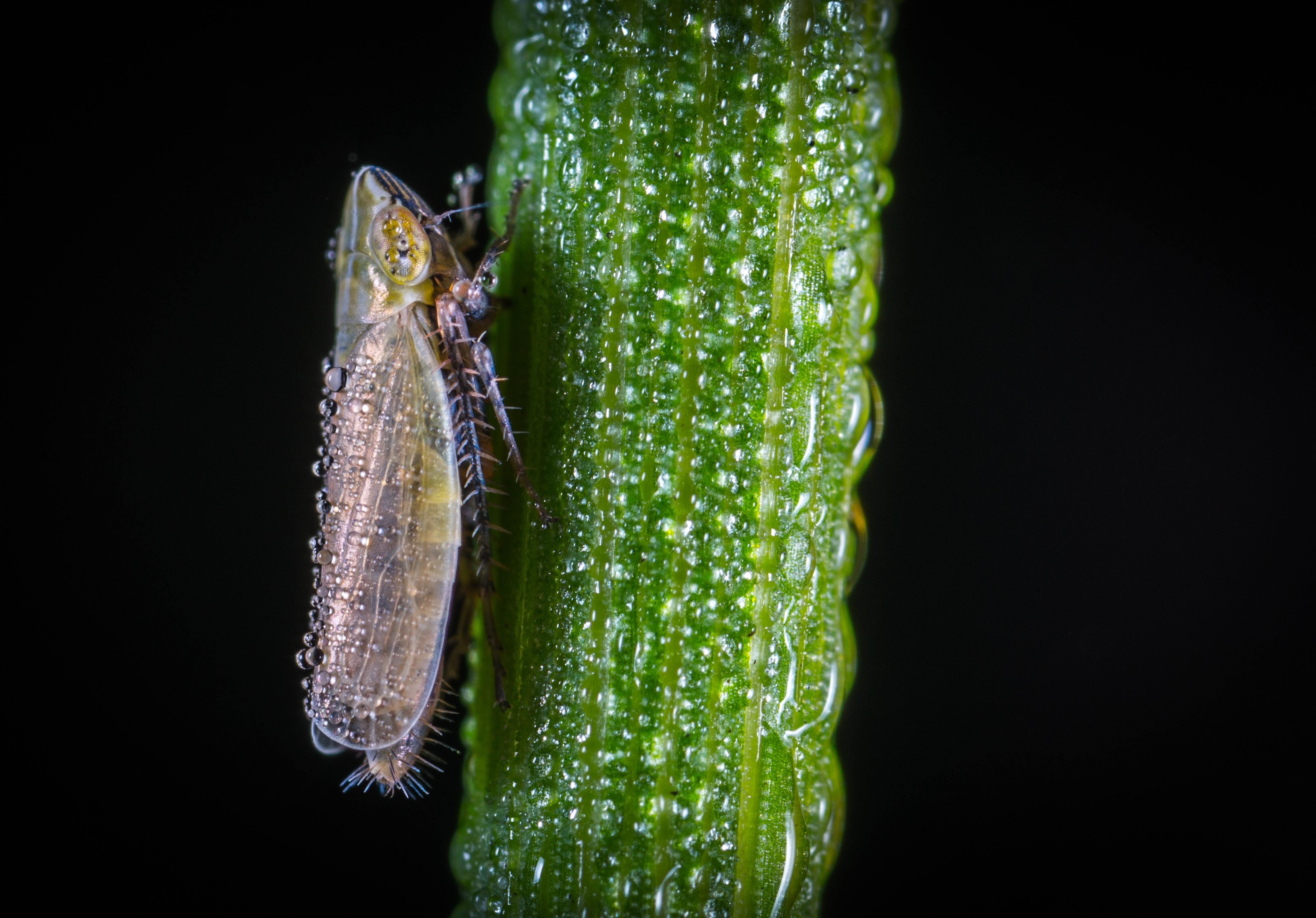 Macro Photography of Froghopper On Leaf, Animal, Moisture, Wildlife, Wild animal, HQ Photo