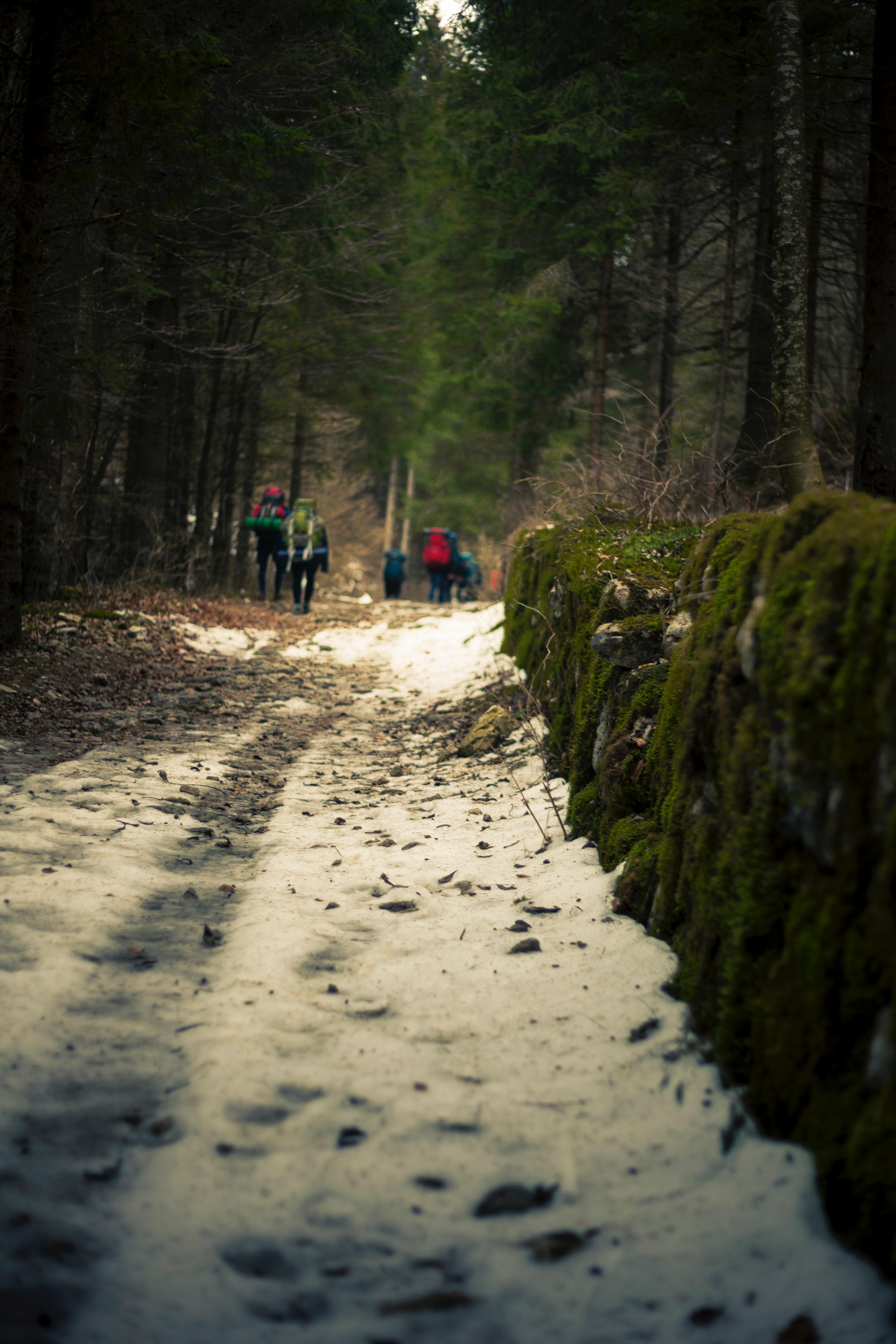 Macro Photography of Snowy Terrain, Daylight, Scenic, Winter, Weather, HQ Photo