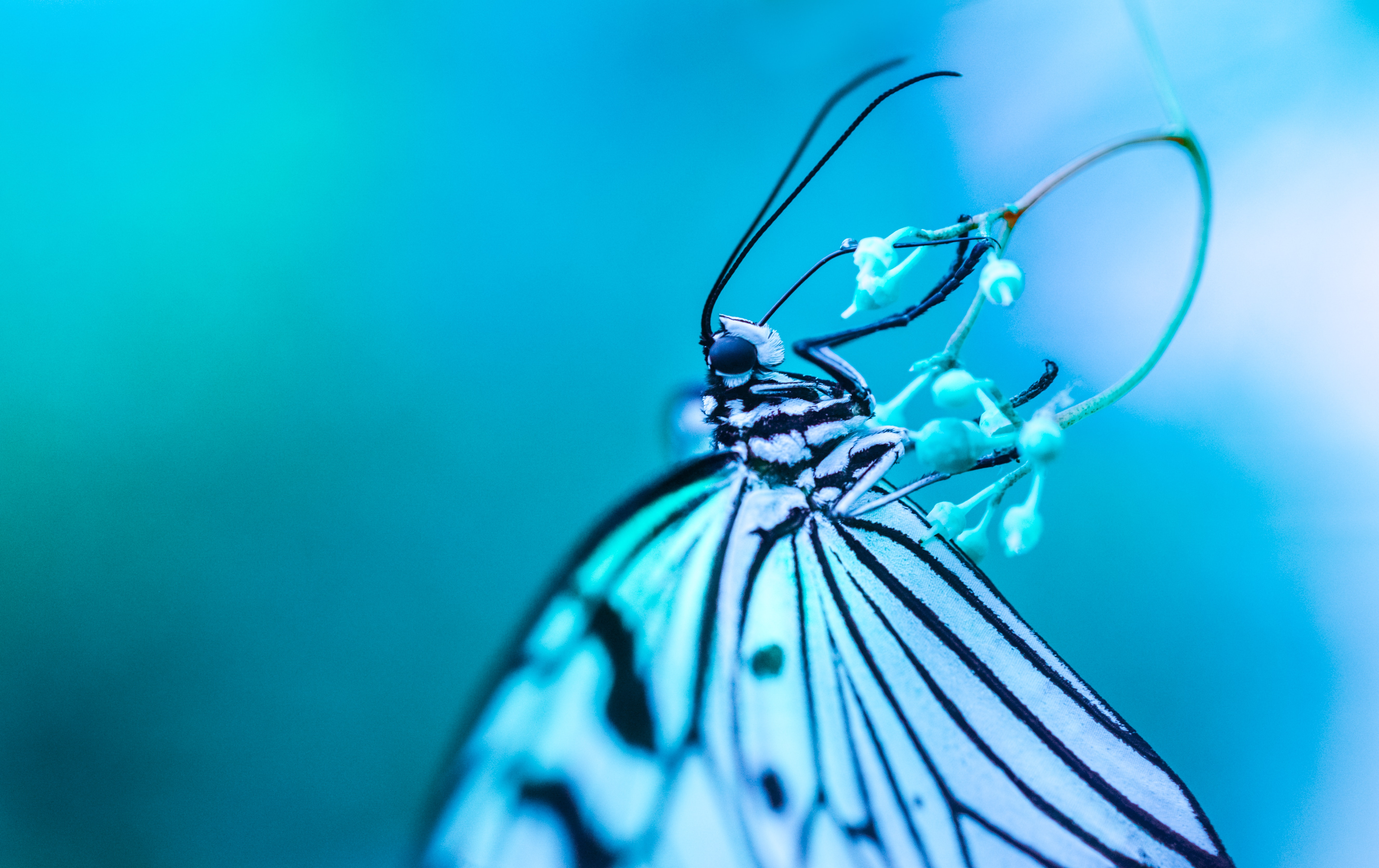 Macro photography of white and black butterfly