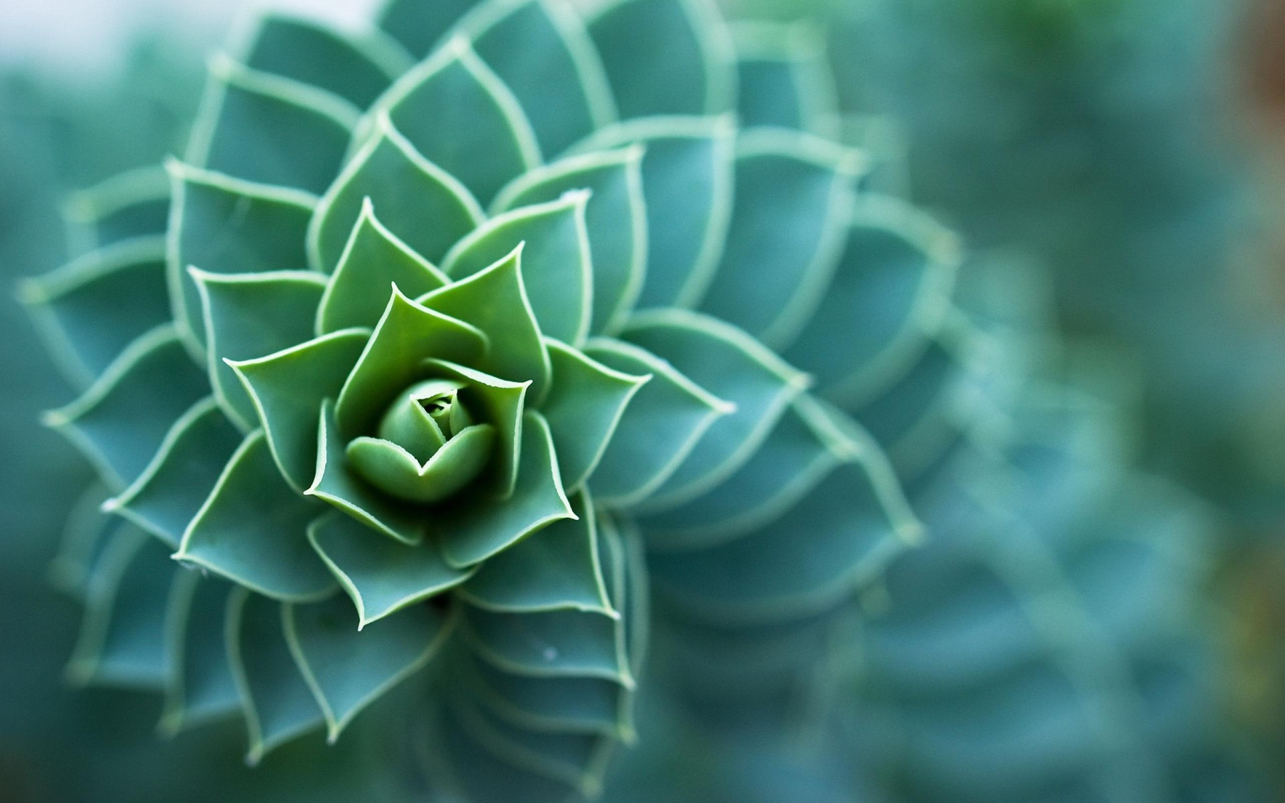 Macro plant photo