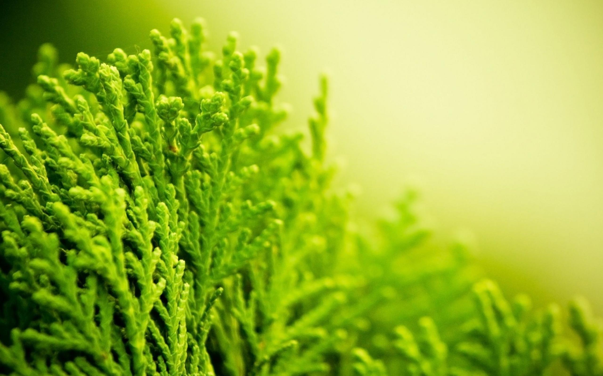 Best Green Plant Macro Wallpaper Best #10540 Wallpaper   High ...