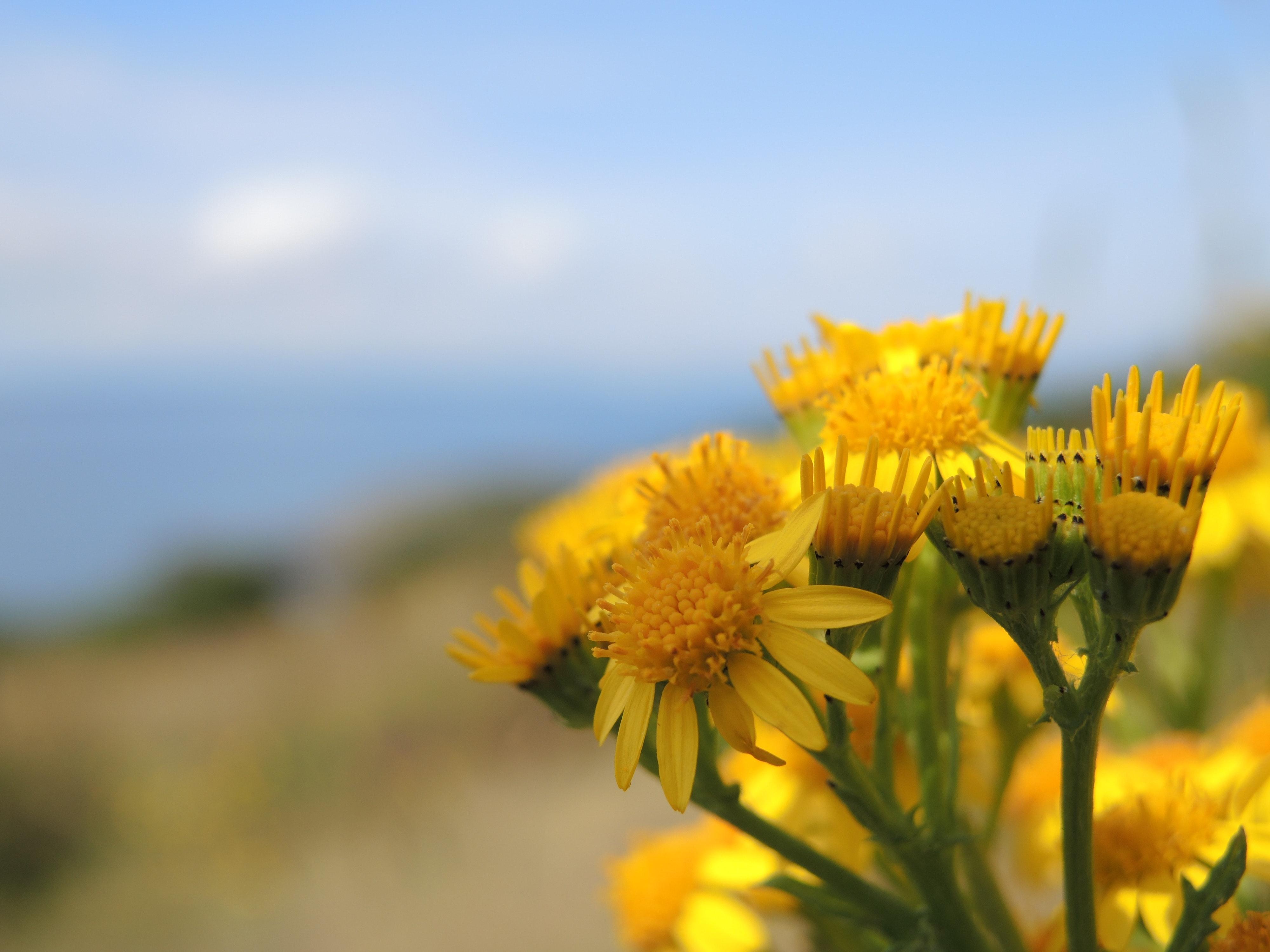 Macro shot of yellow flower photo