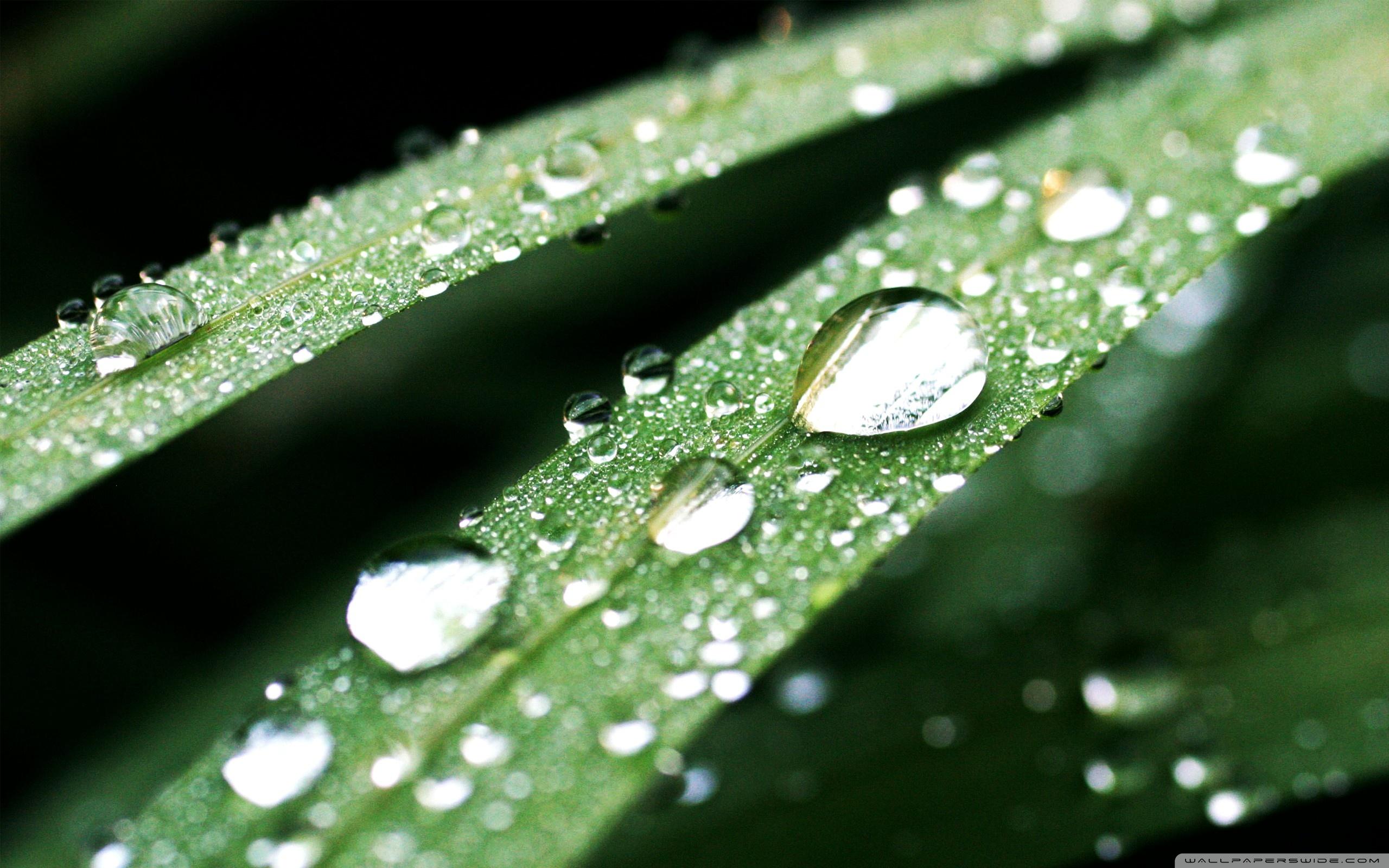 Free Photo Macro Water Drops Abstract Nature Water Free Download Jooinn