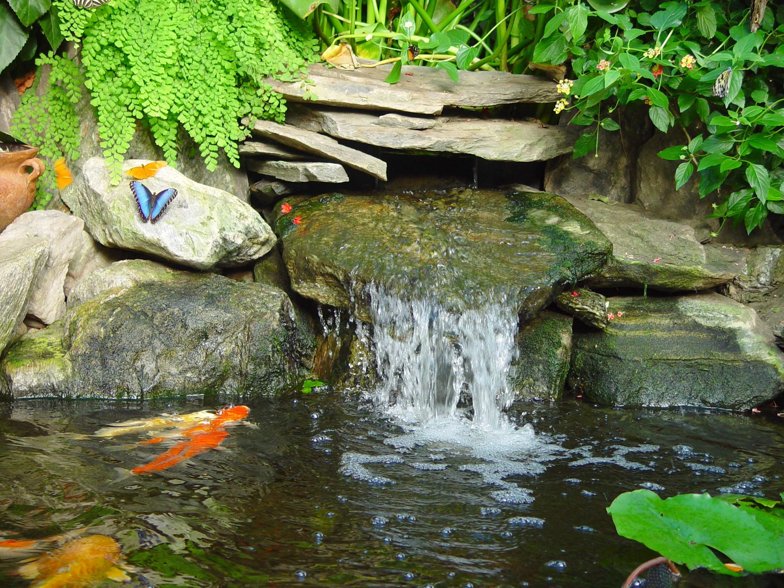 Magic Wings Butterfly Conservatory & Gardens in Deerfield, MA - New ...