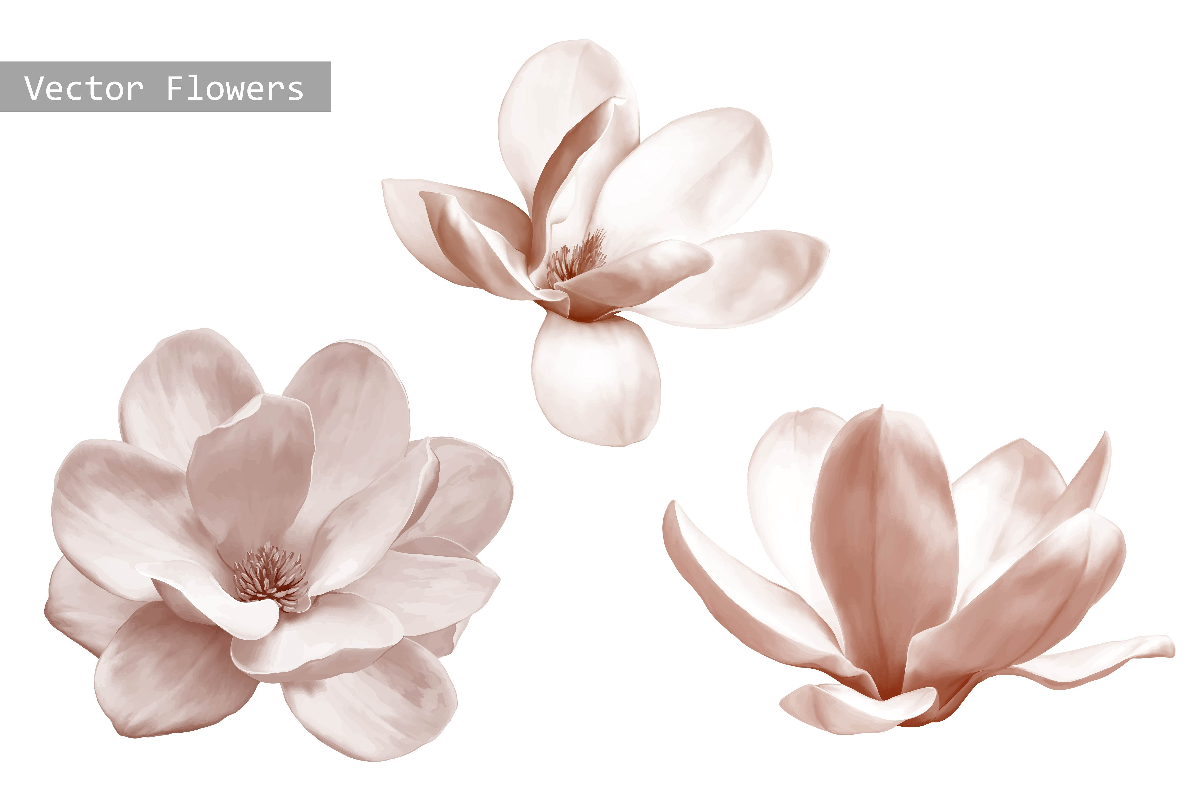 Set of Magnolia Flowers. Vector ~ Objects ~ Creative Market