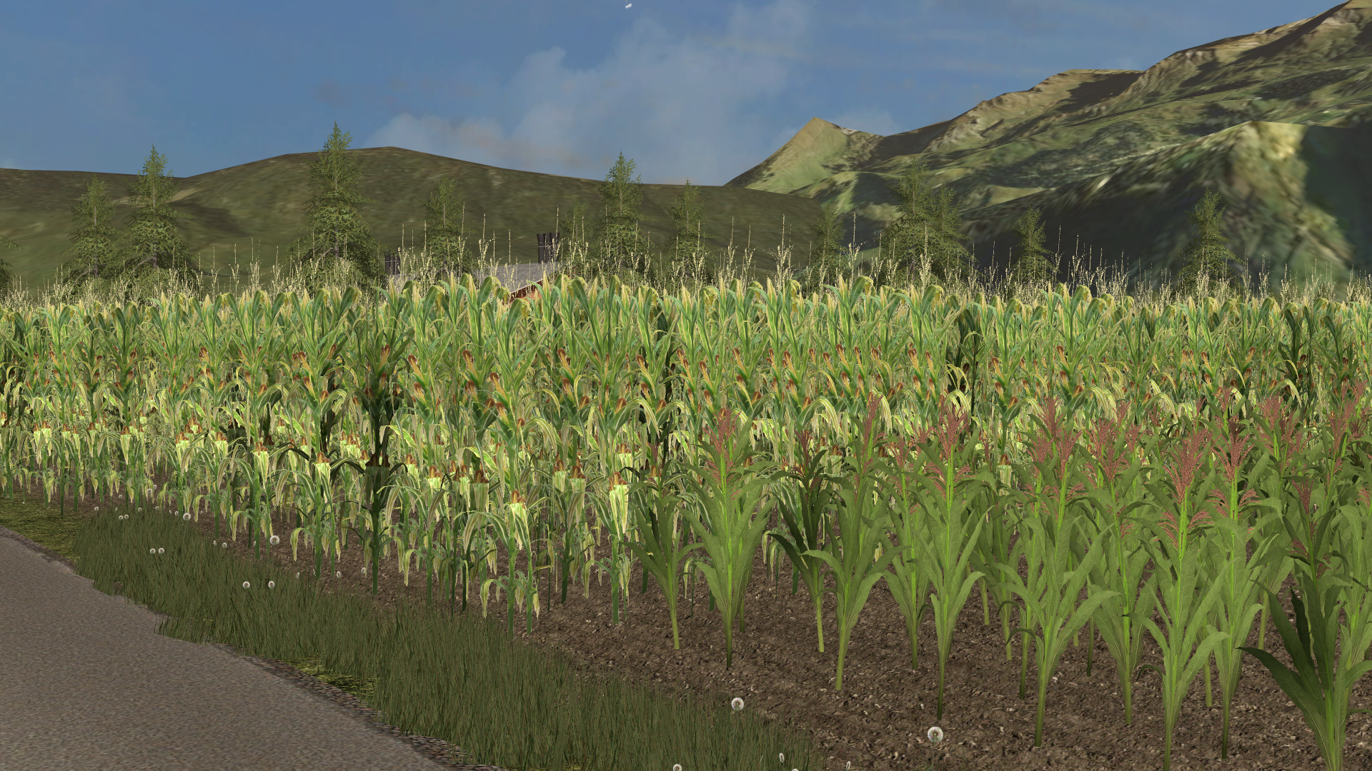 Maize / Corn Texture - Farming simulator 2017 / 17 LS mod