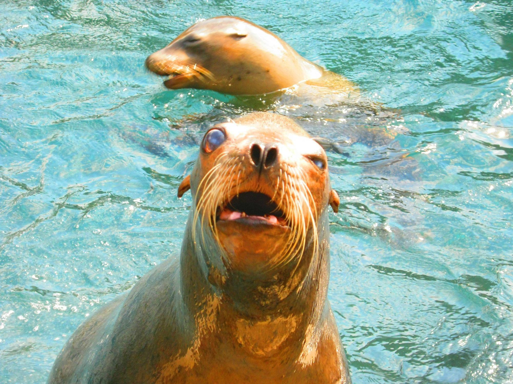 Set out to take some pictures of majestic sea lions, then this guy ...