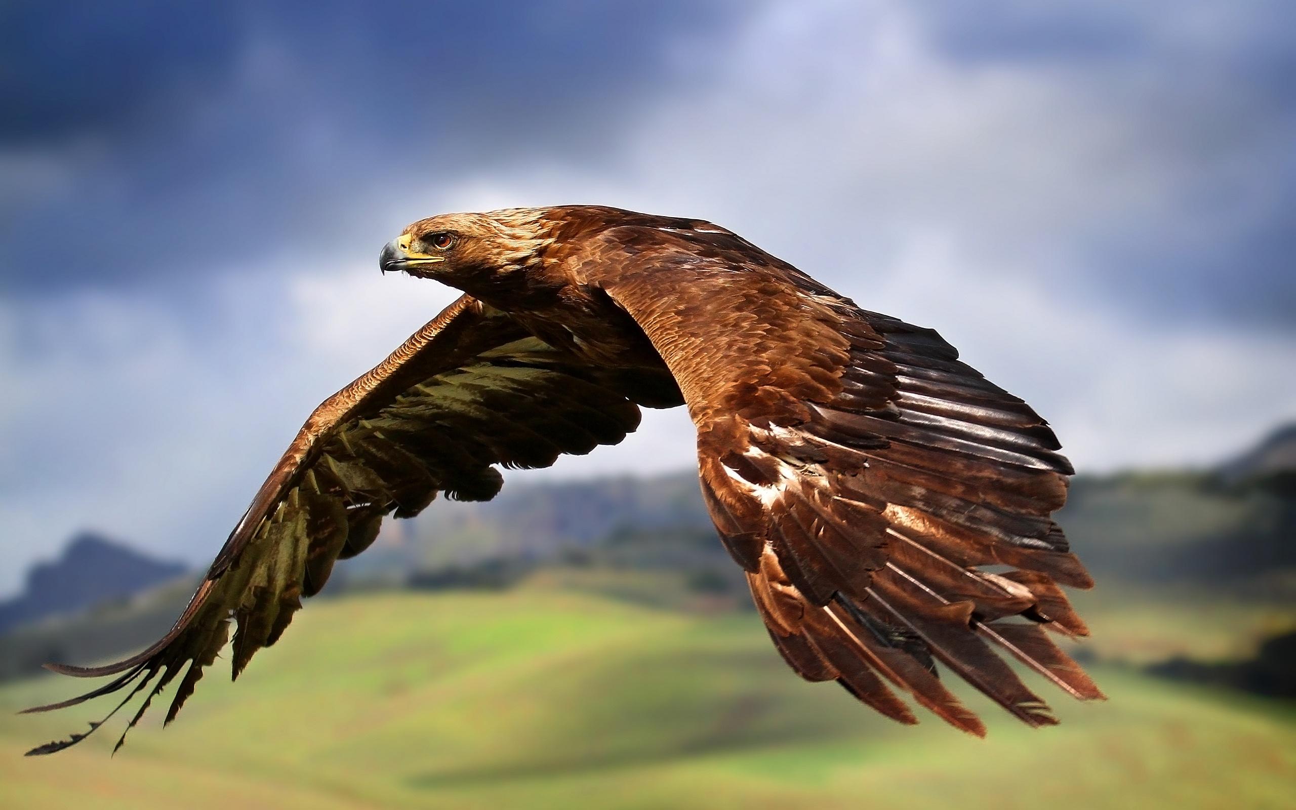 Majestic Eagle #6954974