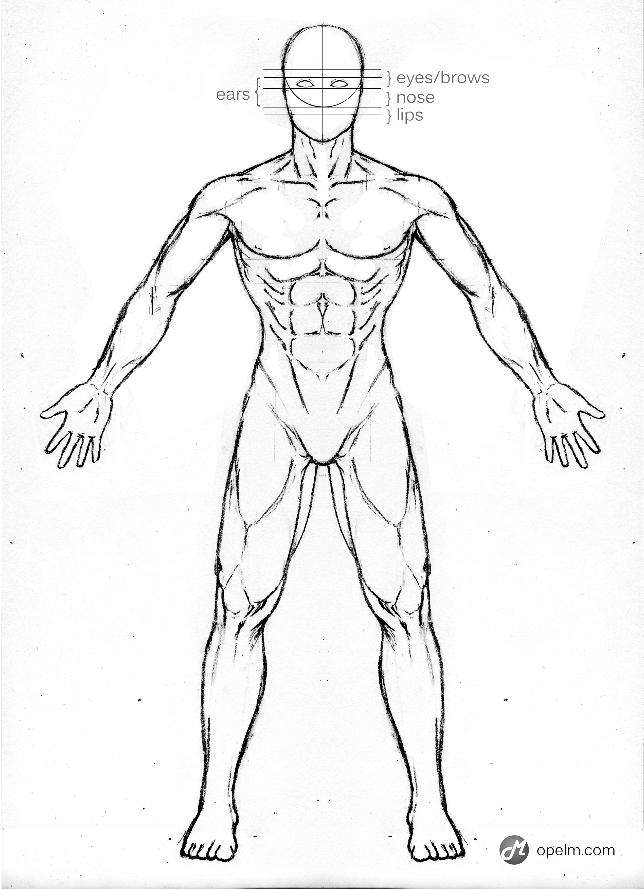 Male Model Sketch Drawing Male Anatomy Poses Images - Learn Human ...