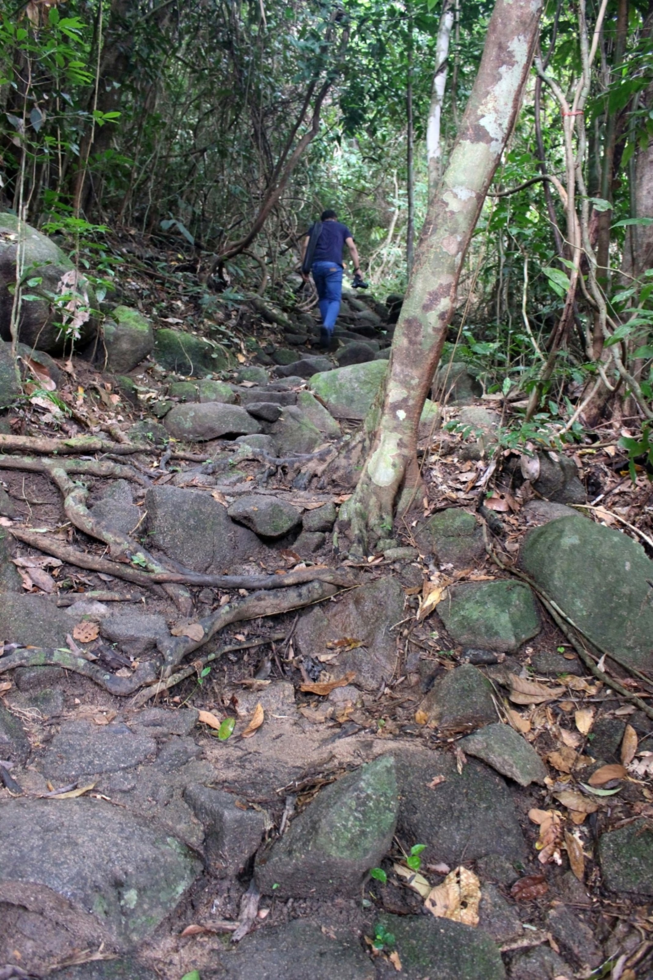 Man hikes up a mountain forest path, Rainforest, Way, Walk, Tropical, HQ Photo
