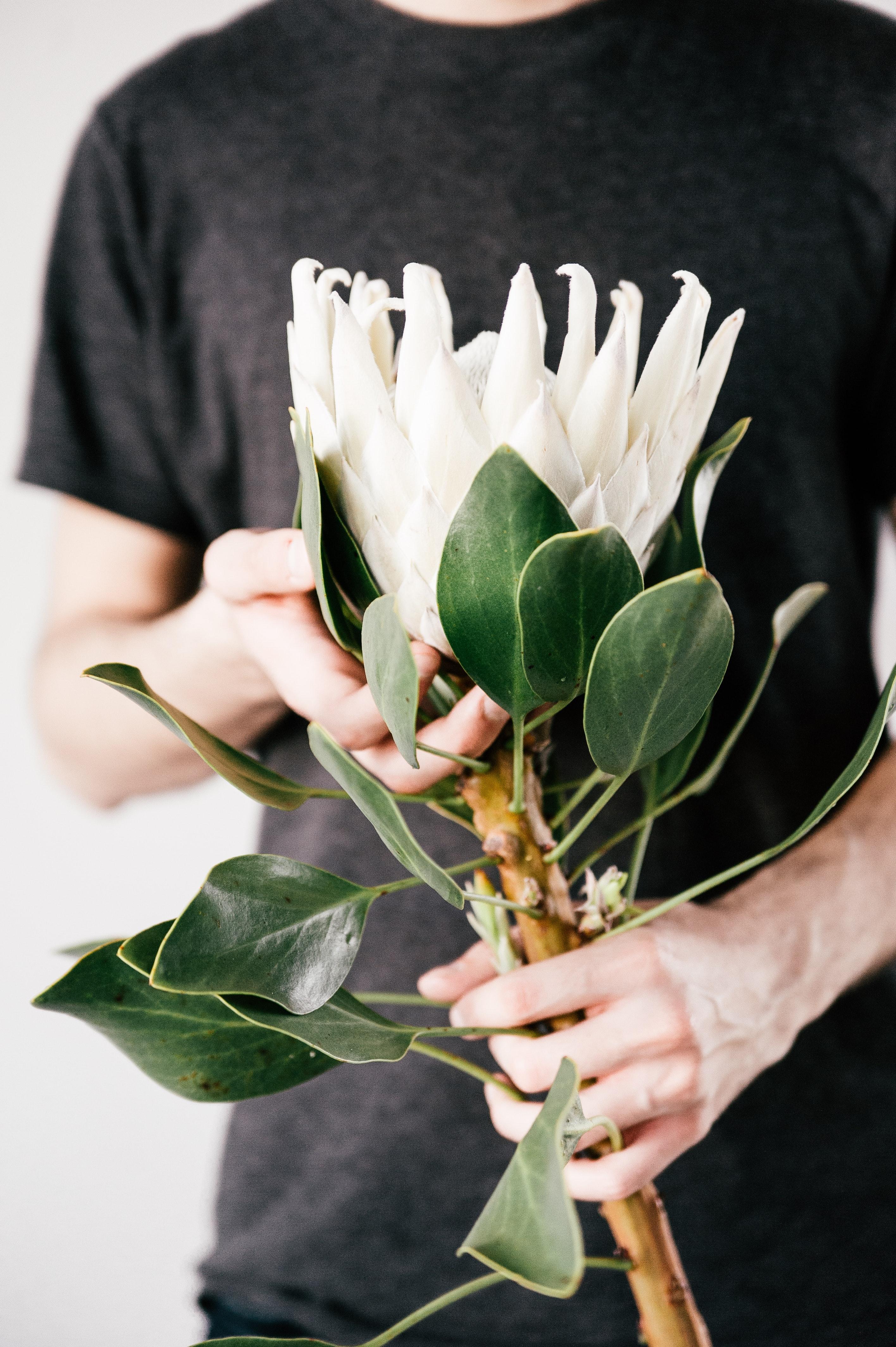 Free photo: Green Plants on Ground - Maturation, Macro