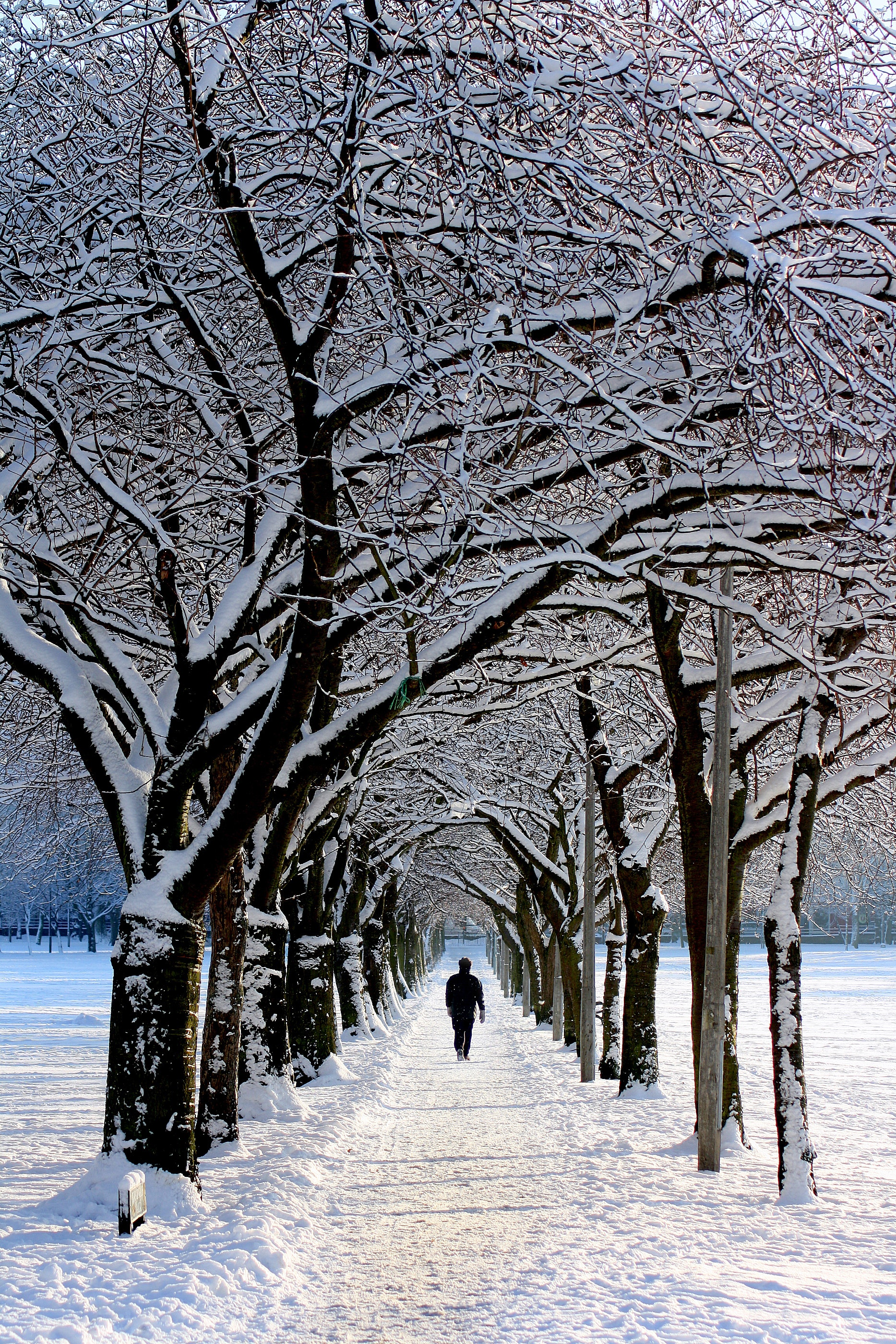 Man in black jacket walking on snowy tree during daytime photo