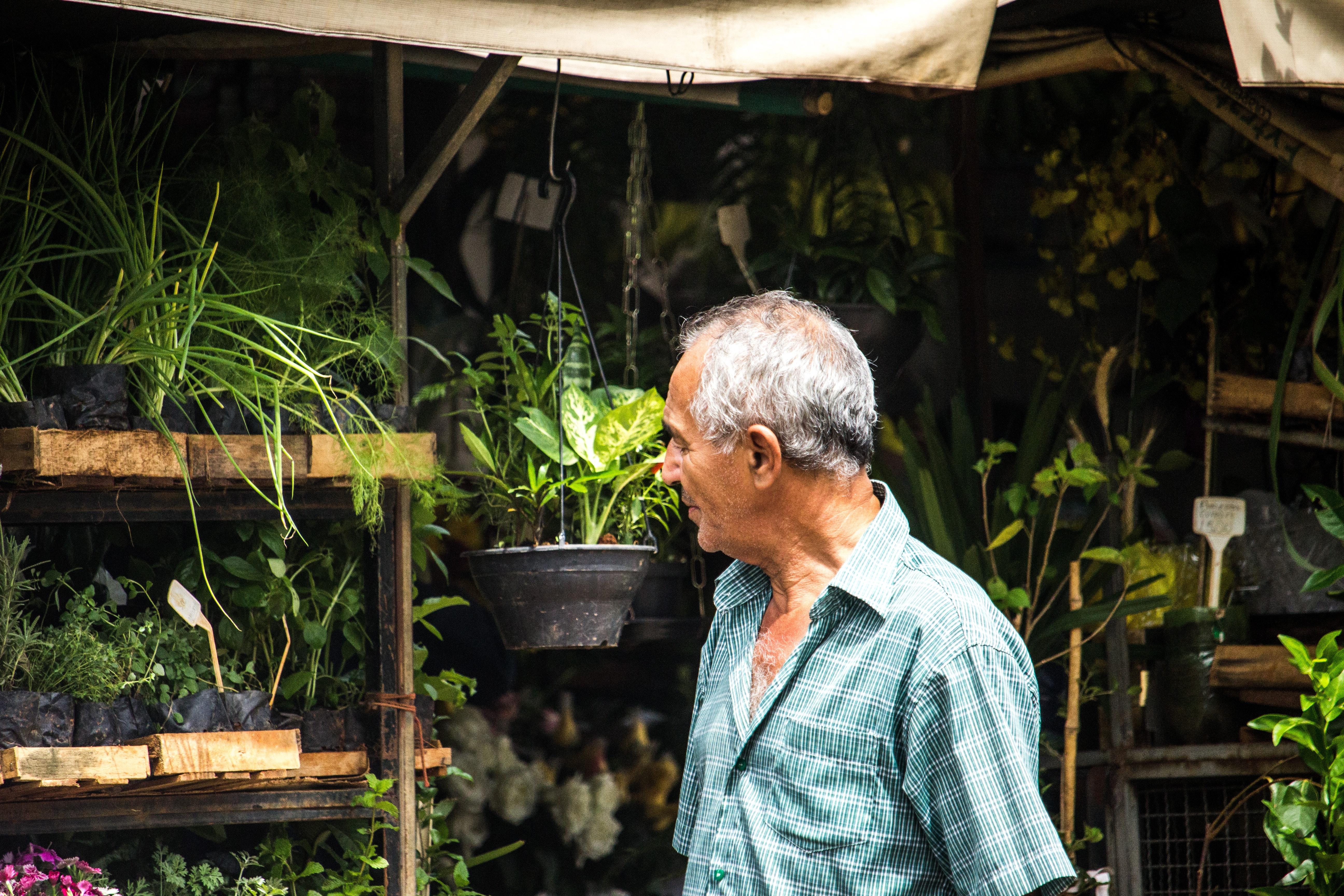 Man in blue button-up t-shirt walks near green leaf plants photo