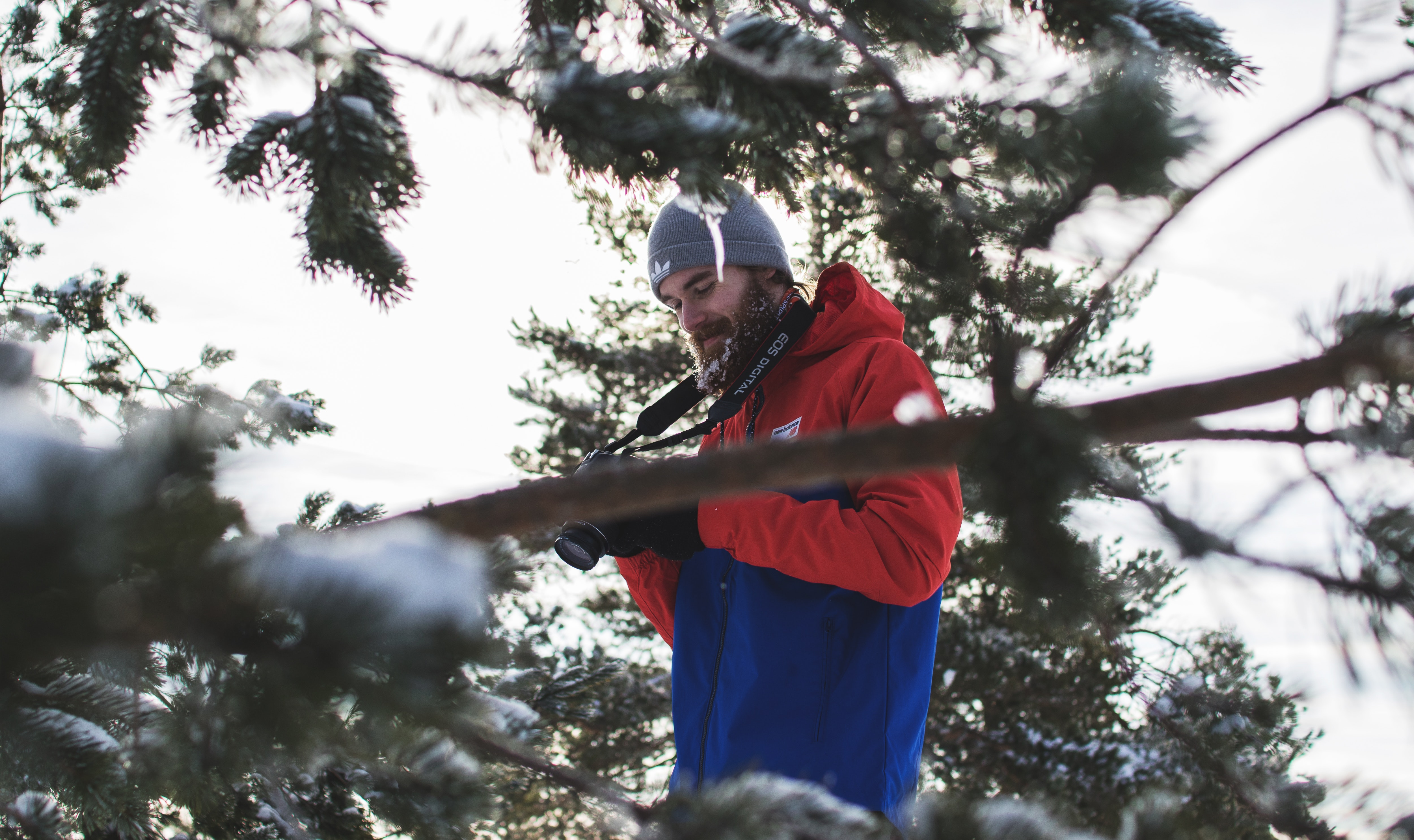 Man in red and blue jacket near trees photo