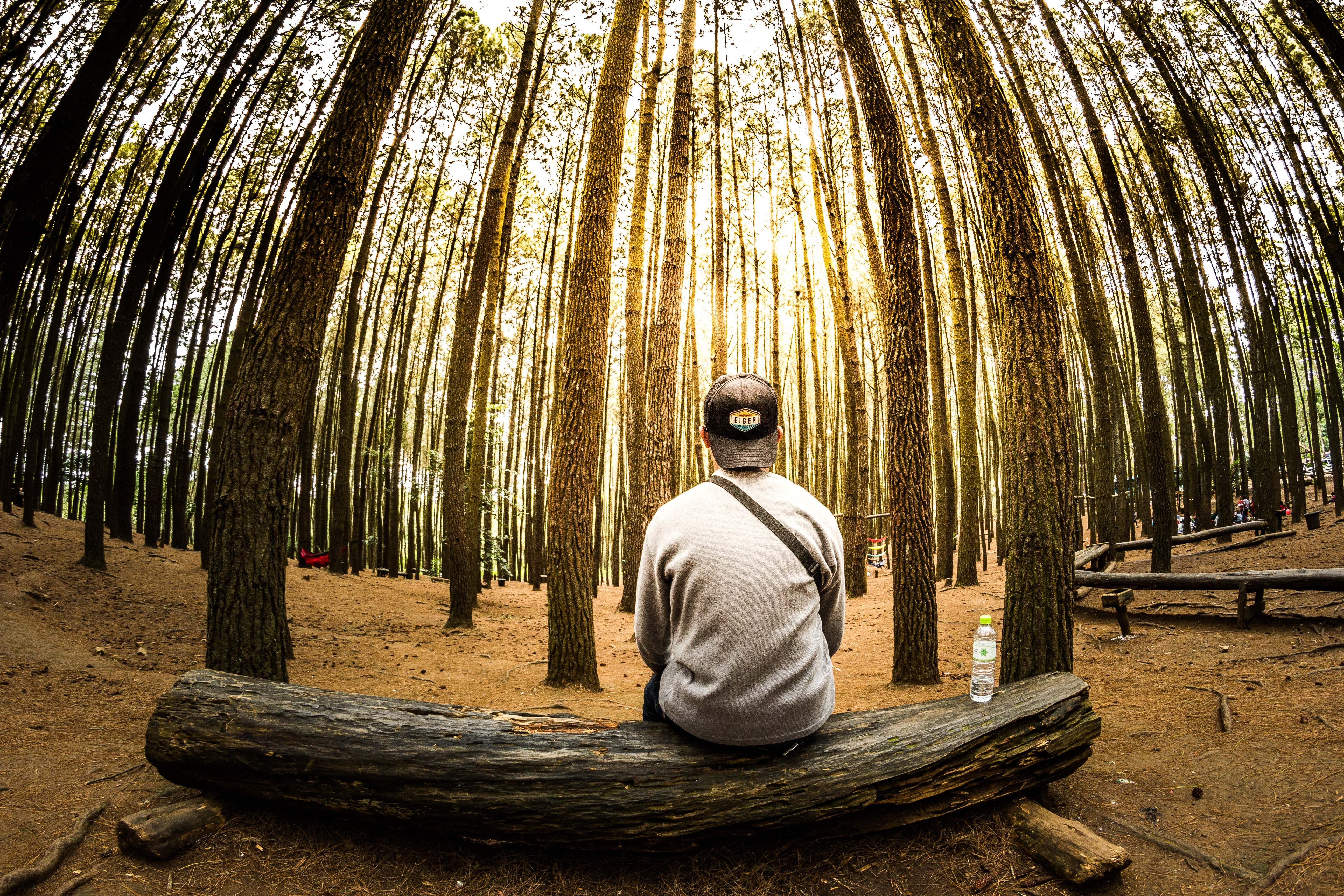 Man Siting on Log in Center of Forest Panoramic Photo, Forest, Man, Outdoors, Person, HQ Photo