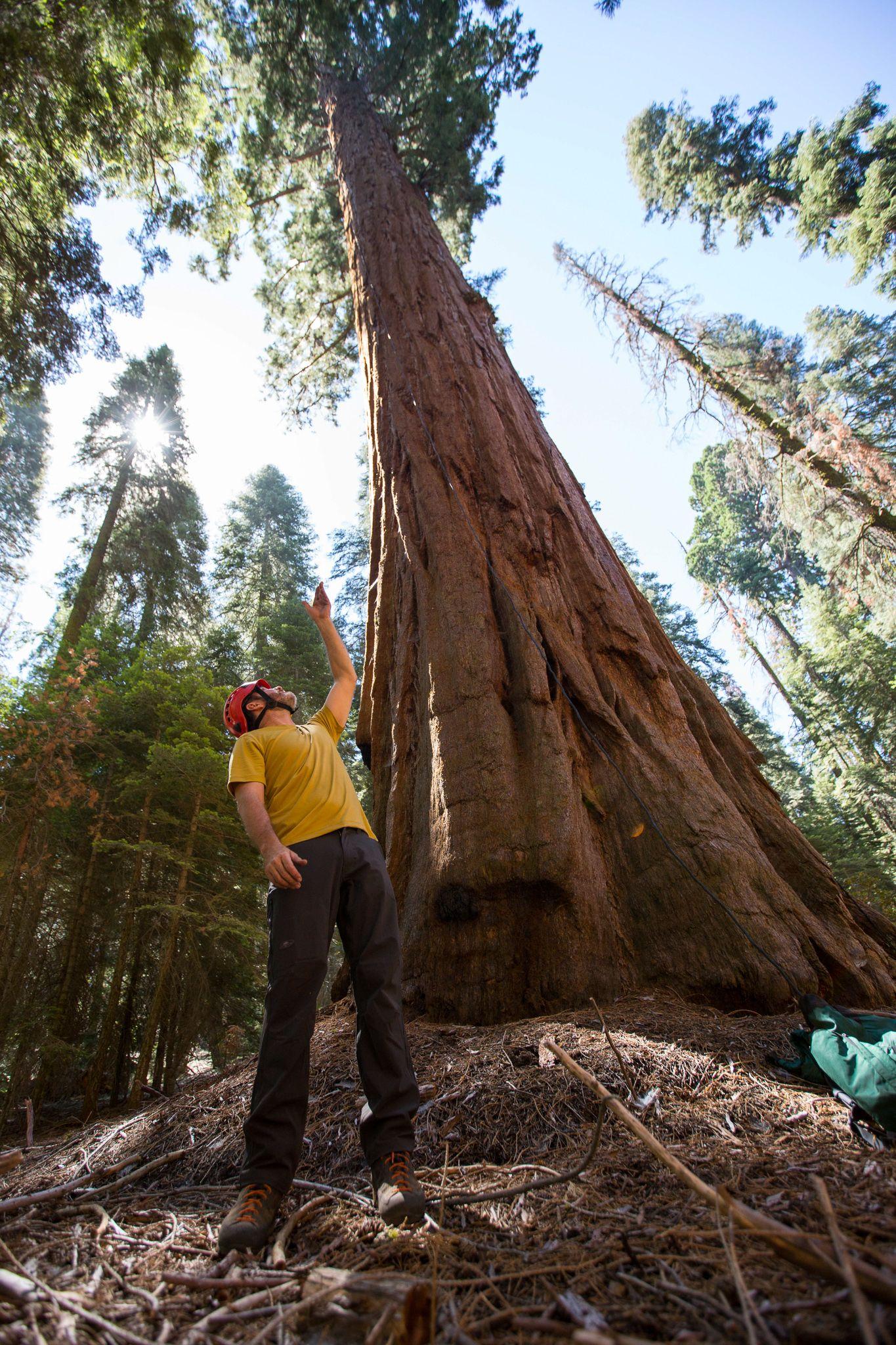 Last Tree Standing - bioGraphic