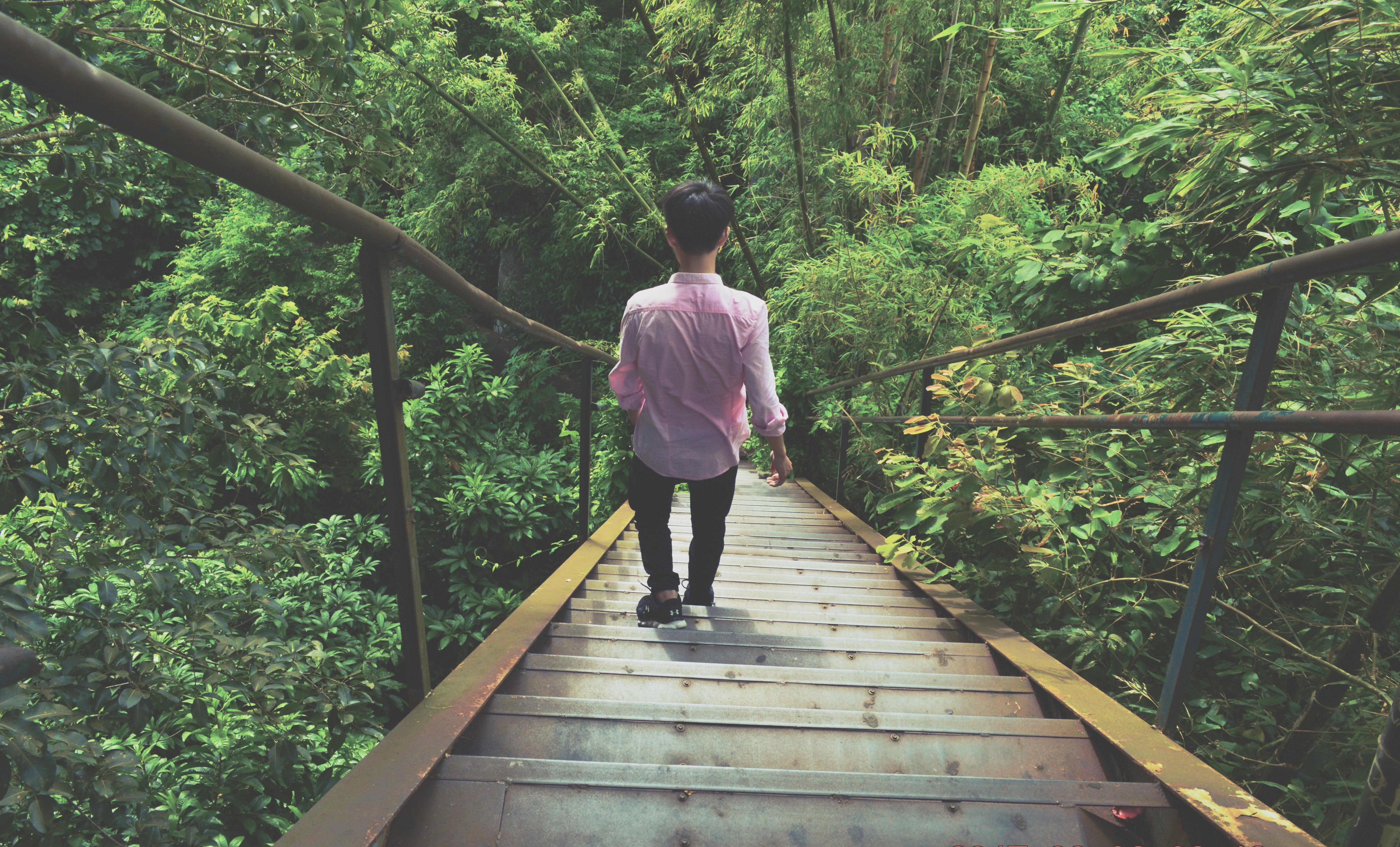 Man Wearing Pink Dress Shirt Walking Through Stairs, Adventure, Outdoors, Trees, Travel, HQ Photo