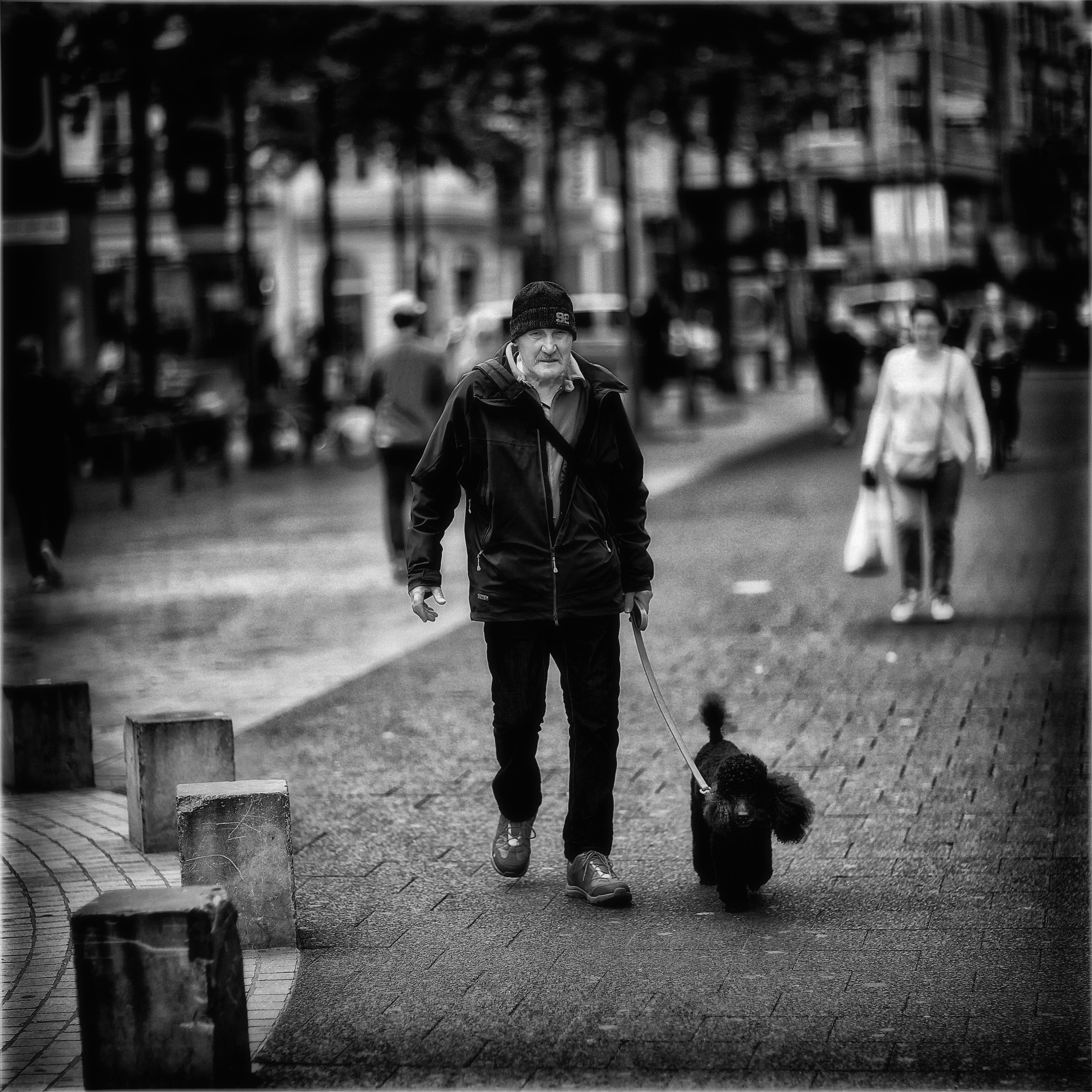 Man with Poodle, Antwerp, Belgium, Blackandwhite, Bw, HQ Photo