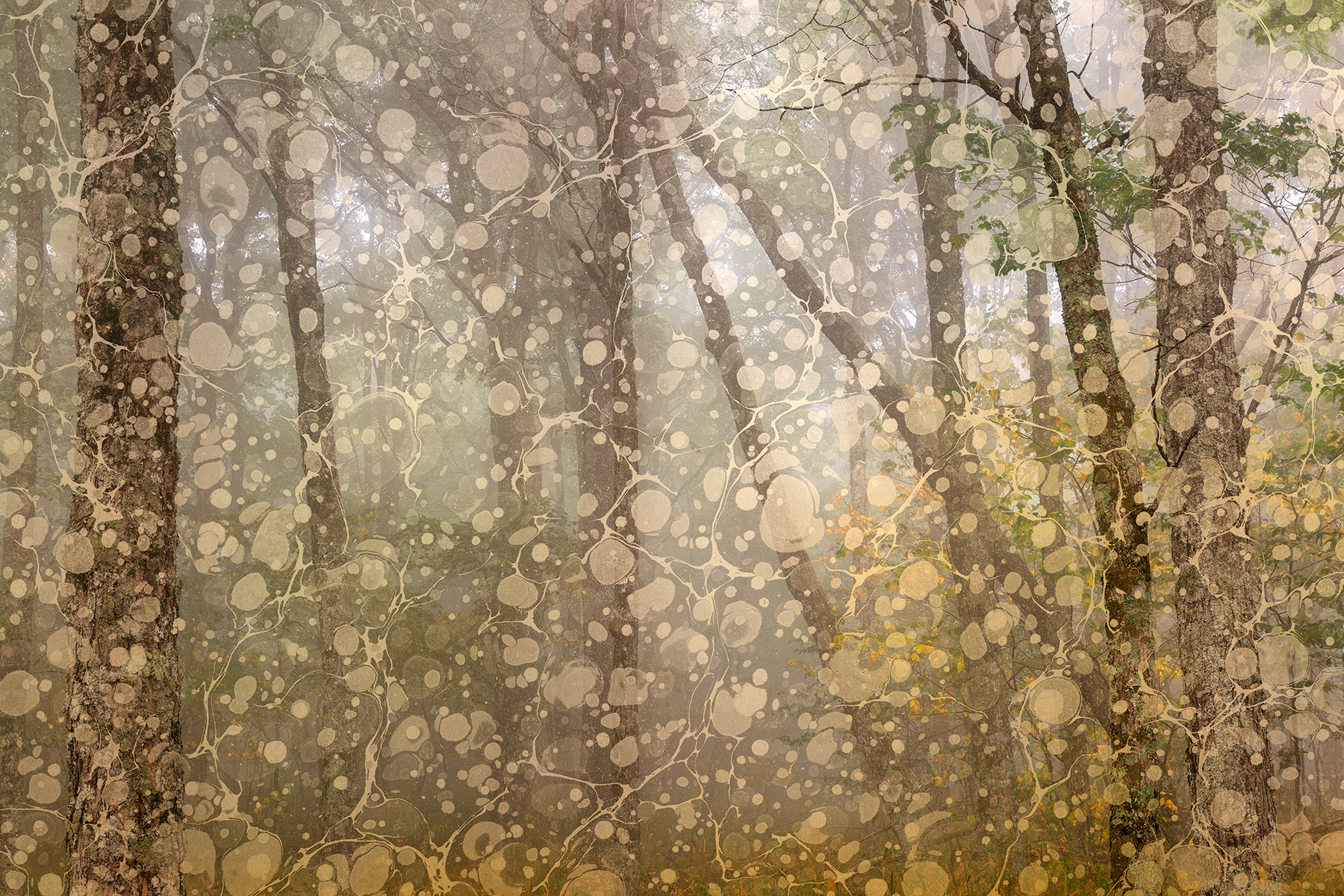 Marbled Mist Forest - Spruce Knob, Abstract, Old, Riverton, Retro, HQ Photo