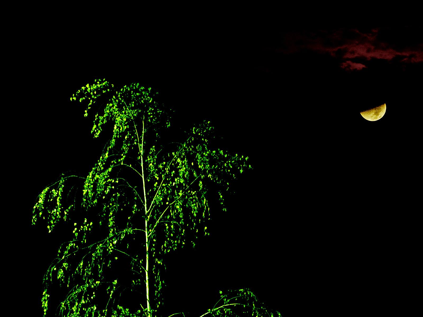 Martian tree illuminated by moonlight photo