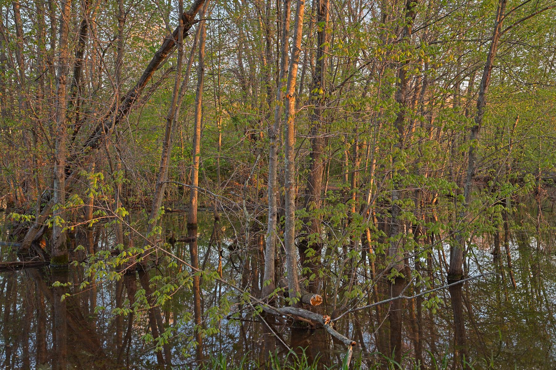 Mckee-beshers marsh - hdr photo