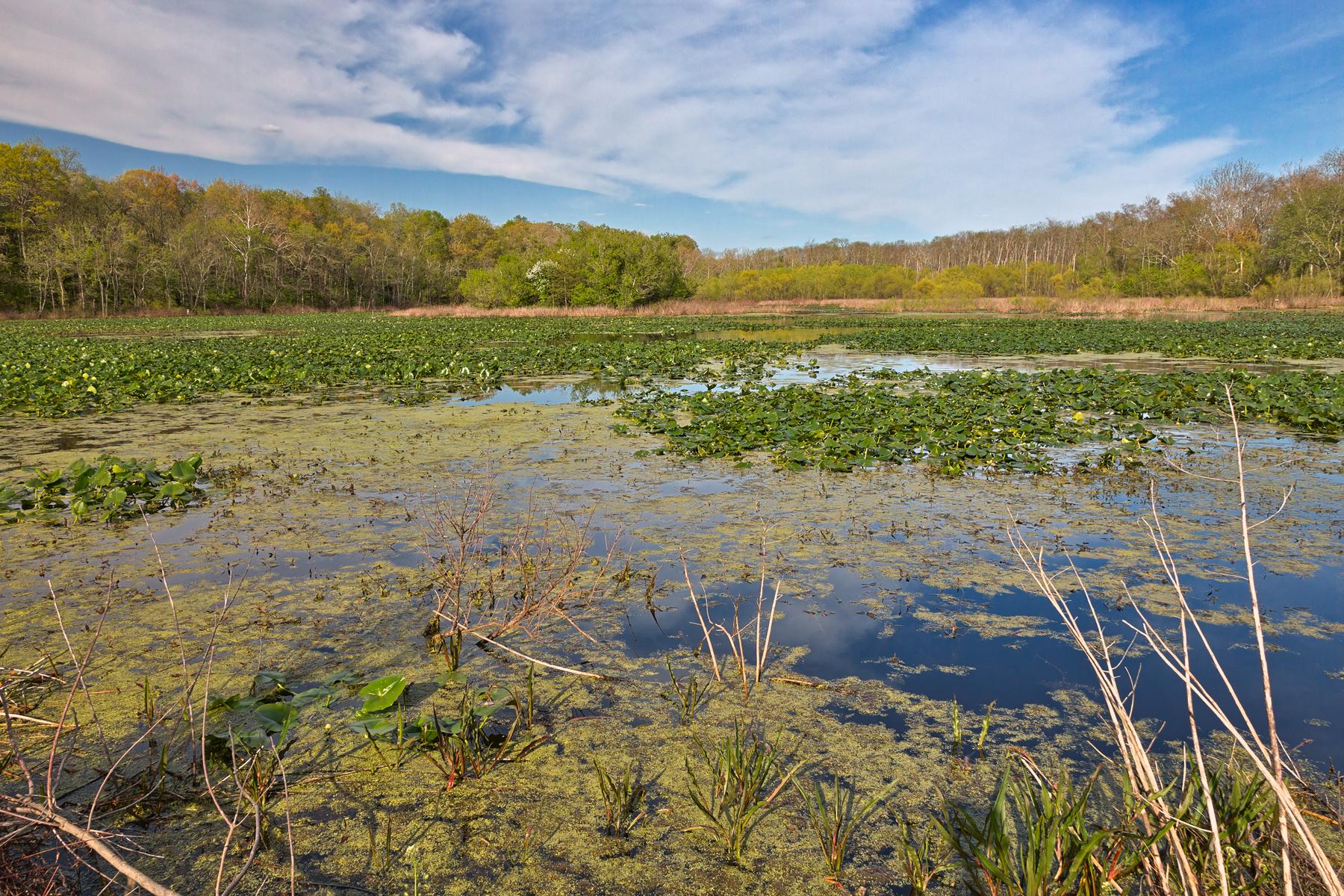 Mckee-beshers marsh photo