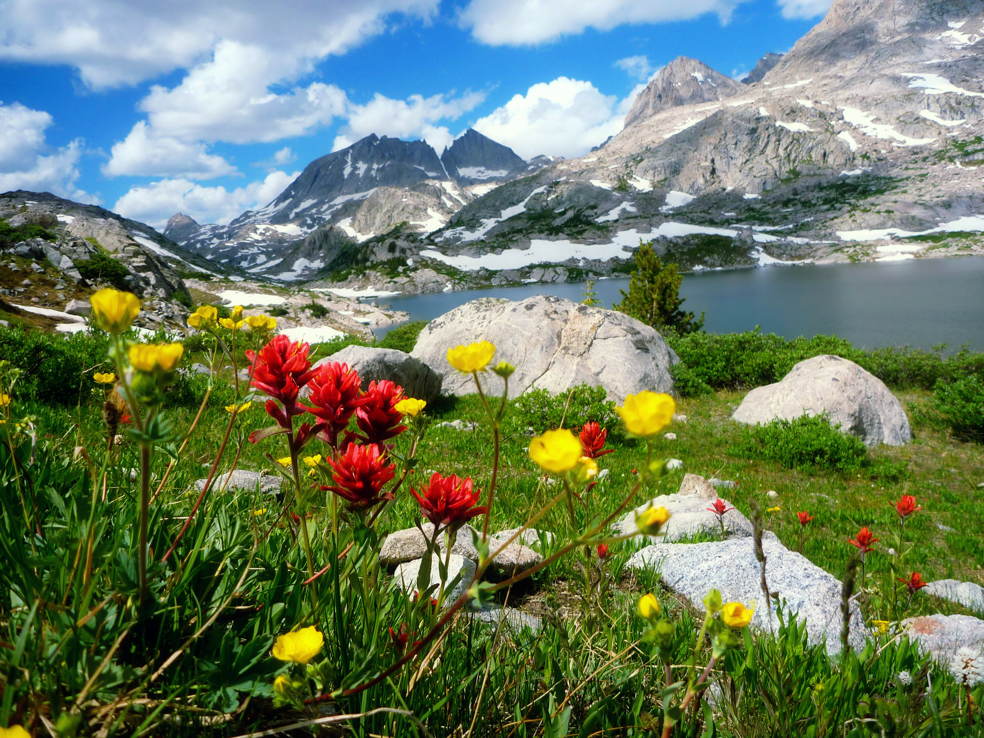 Mountains: Spring Mountain Flowers Lake Sky Wildflowers Peak ...