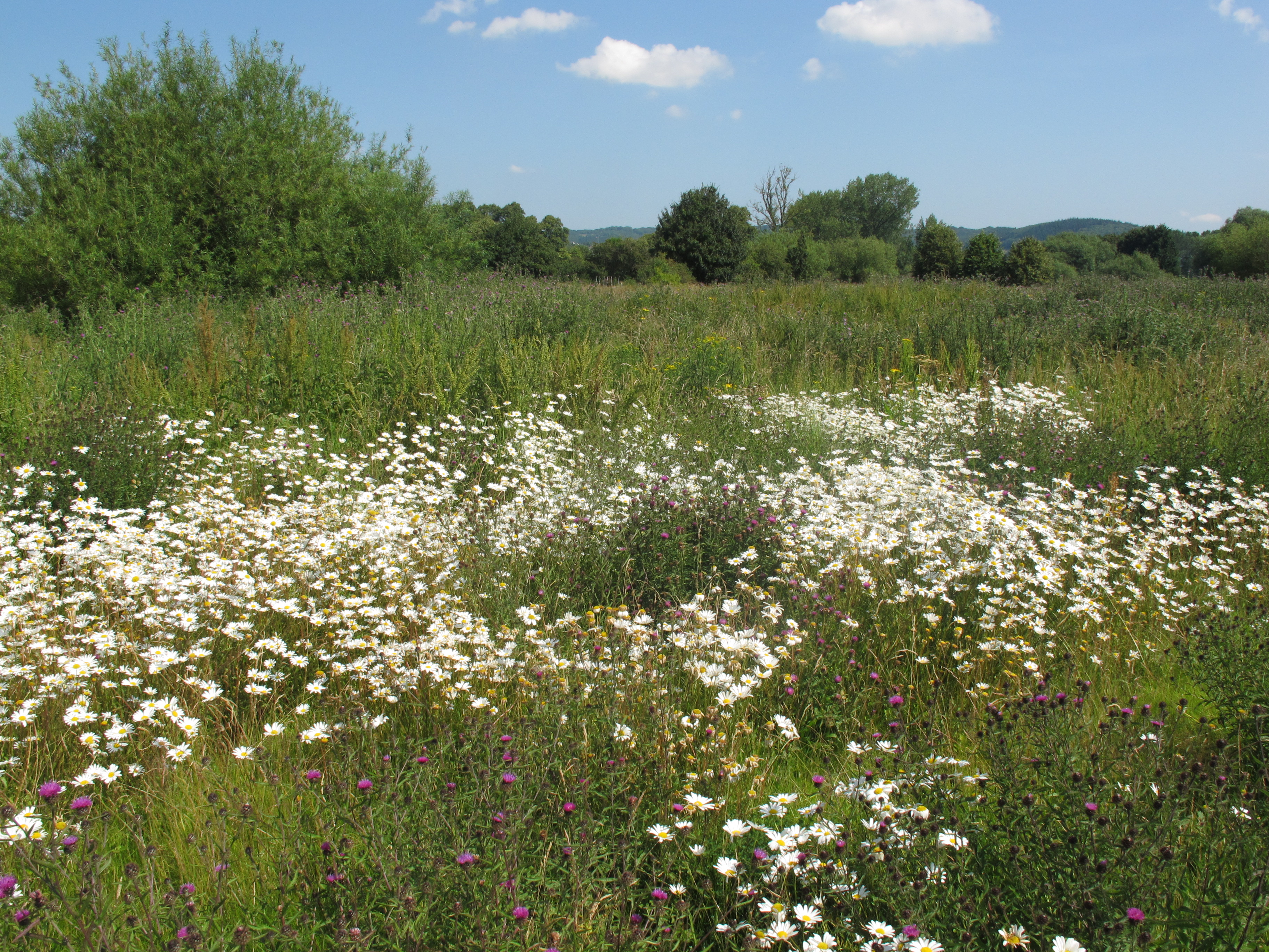File:Two River Meadow 8.JPG - Wikimedia Commons
