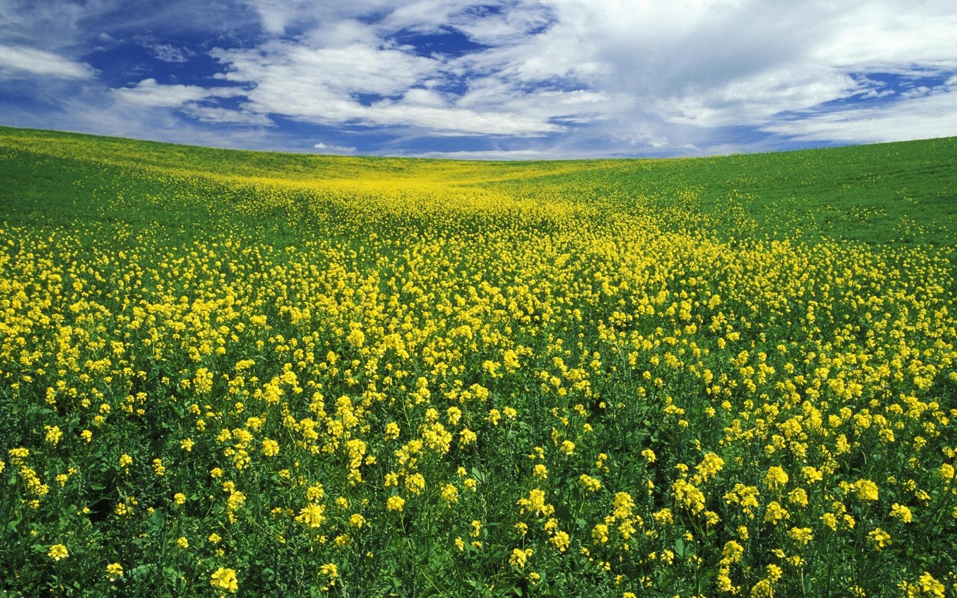 Free photo meadow yellow flower plant one nature free meadow yellow flower mightylinksfo
