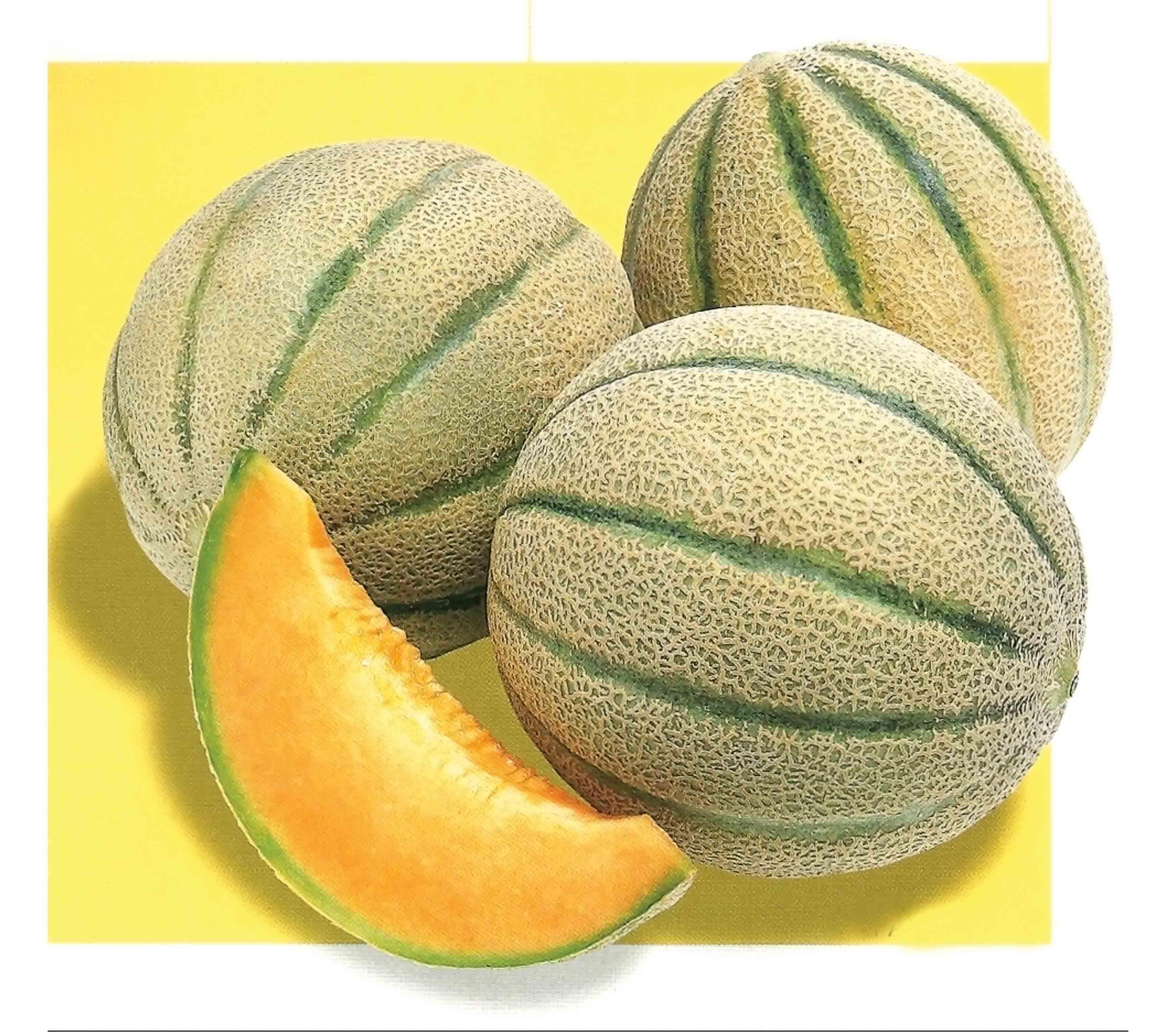 free photo melon raw organic nutrient free download jooinn