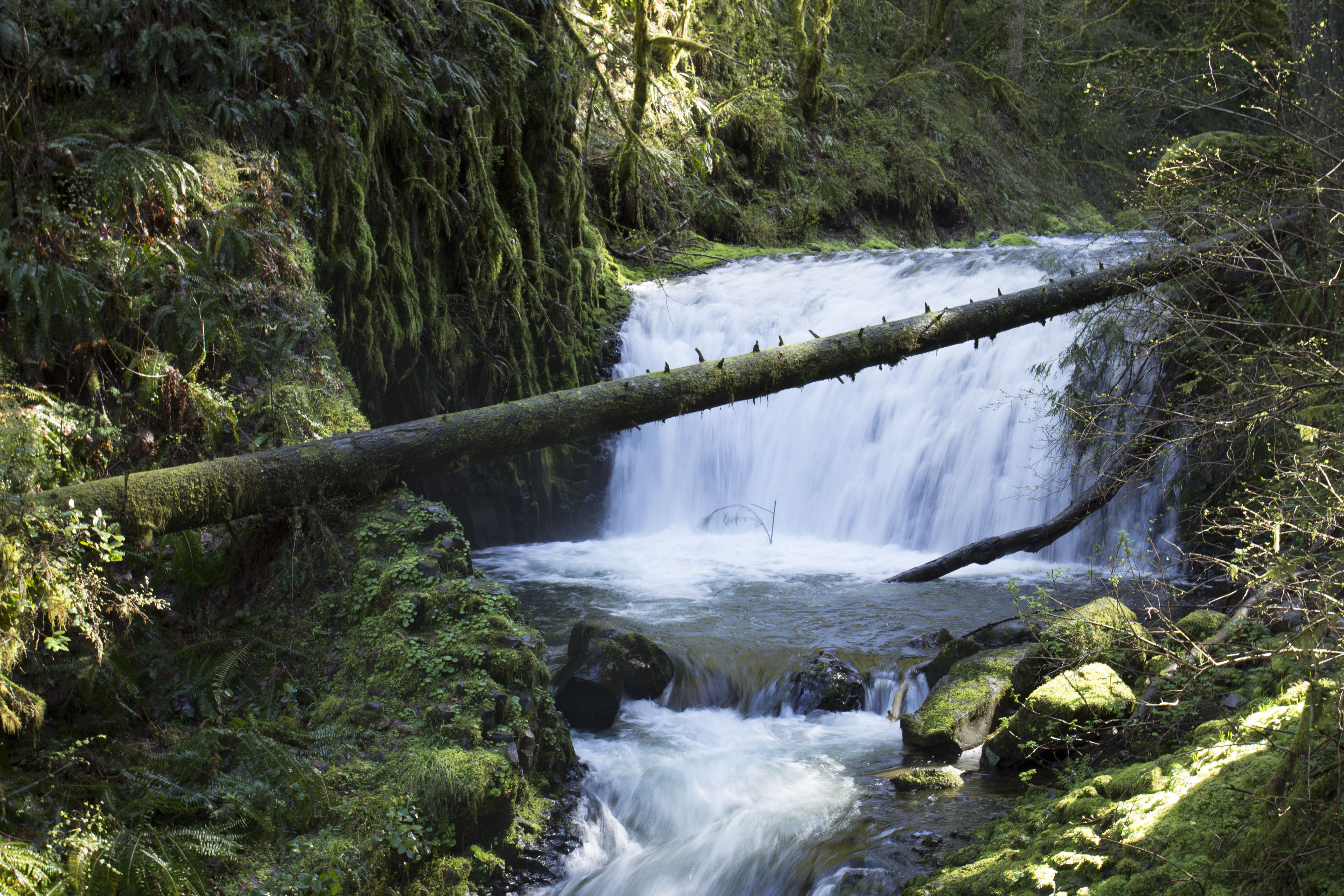Middle dutchman falls, oregon photo