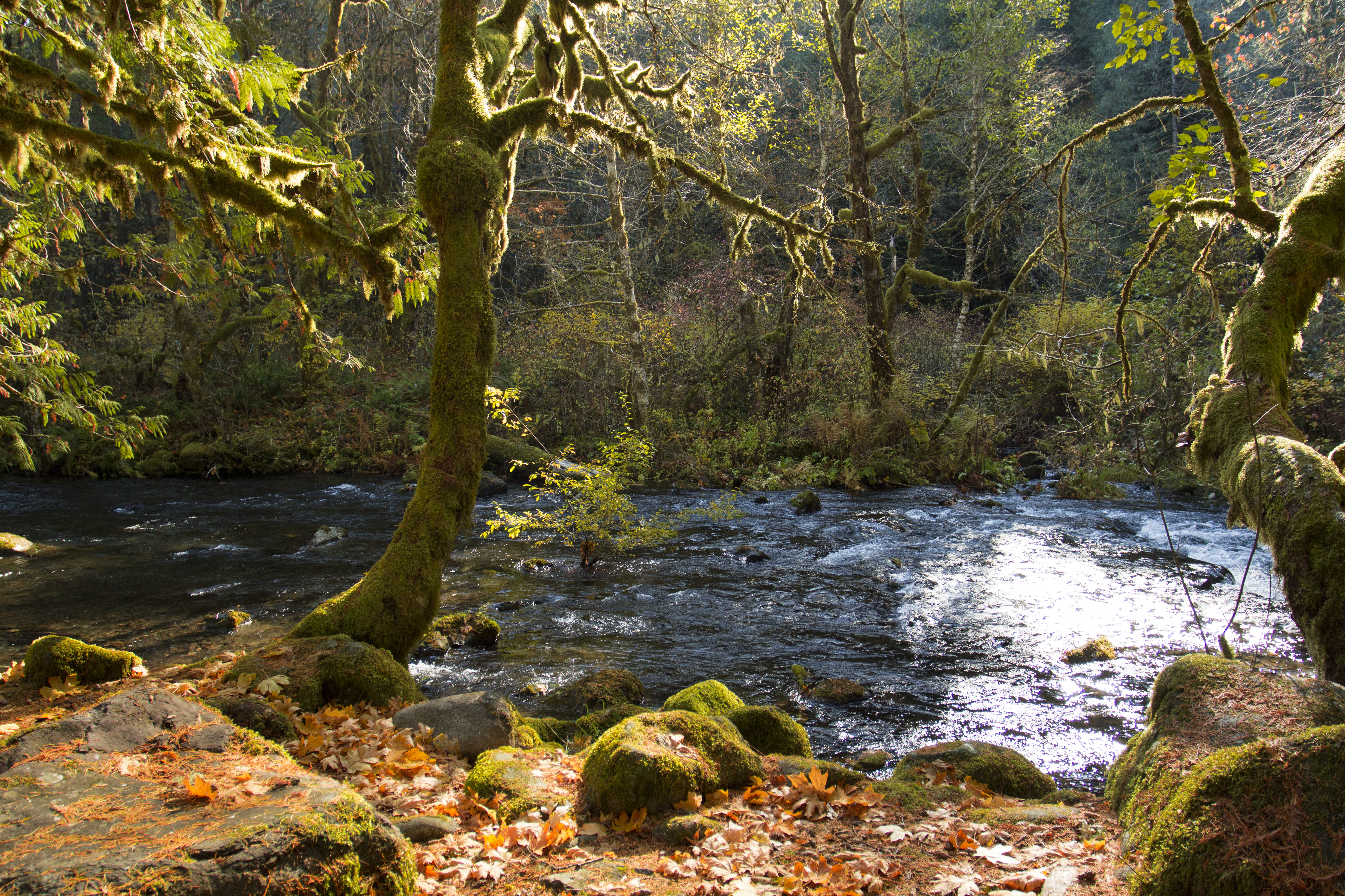 Middle fork willamette river, oregon photo
