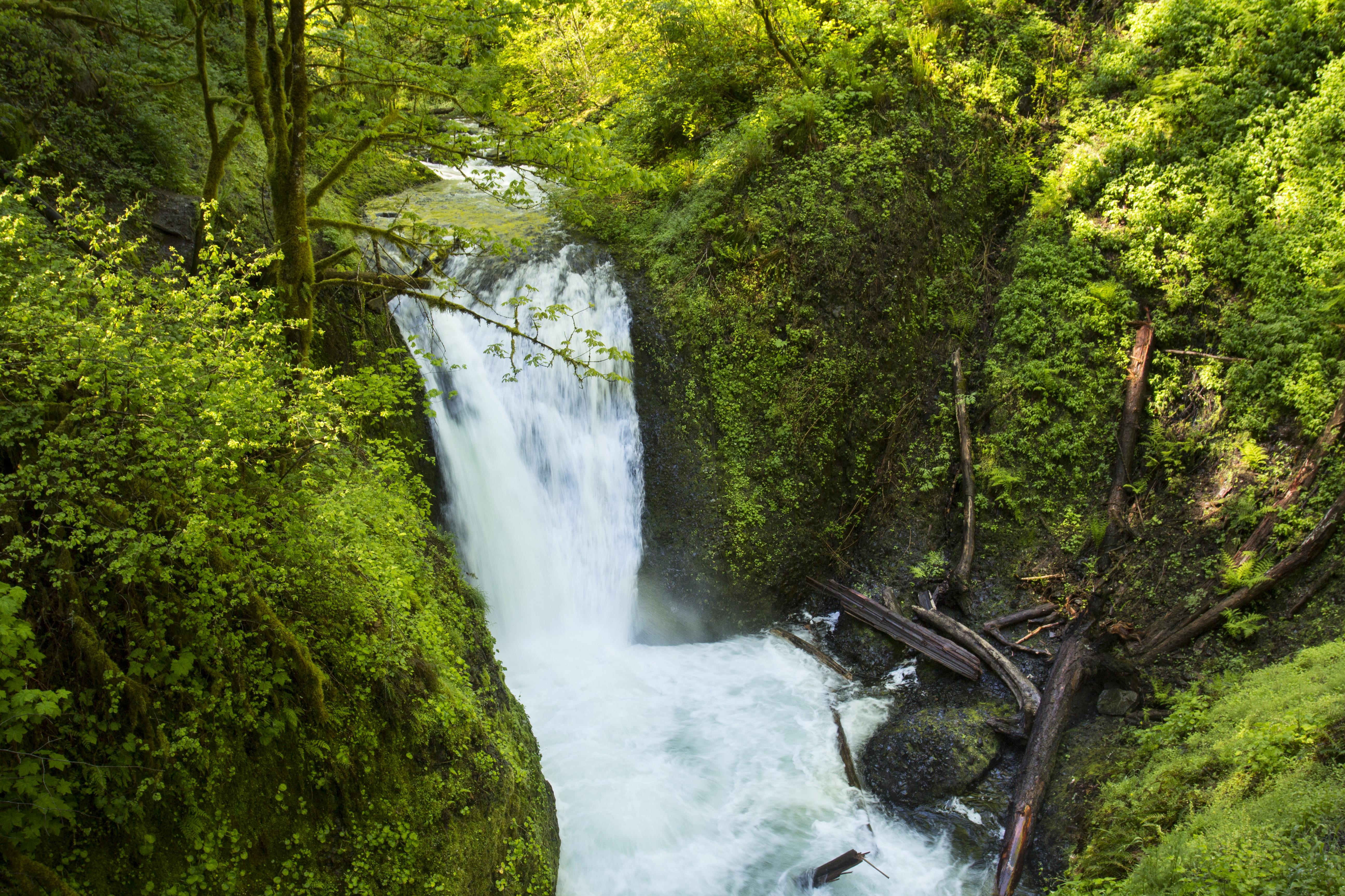 Middle Oneonta Falls, Oregon, Columbia, Falls, Gorge, Logs, HQ Photo