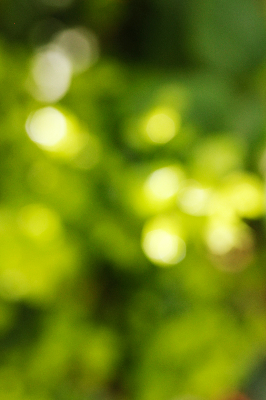 free photo milky green blurred background smooth soft splat